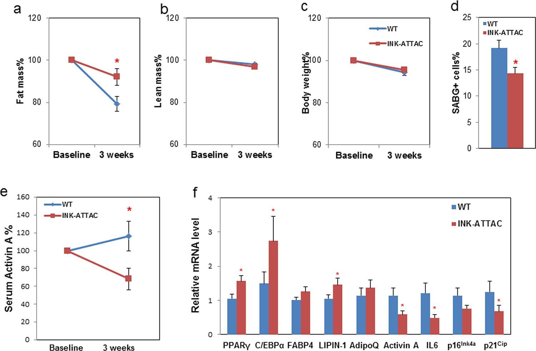 Targeting senescent cells enhances adipogenesis and metabolic