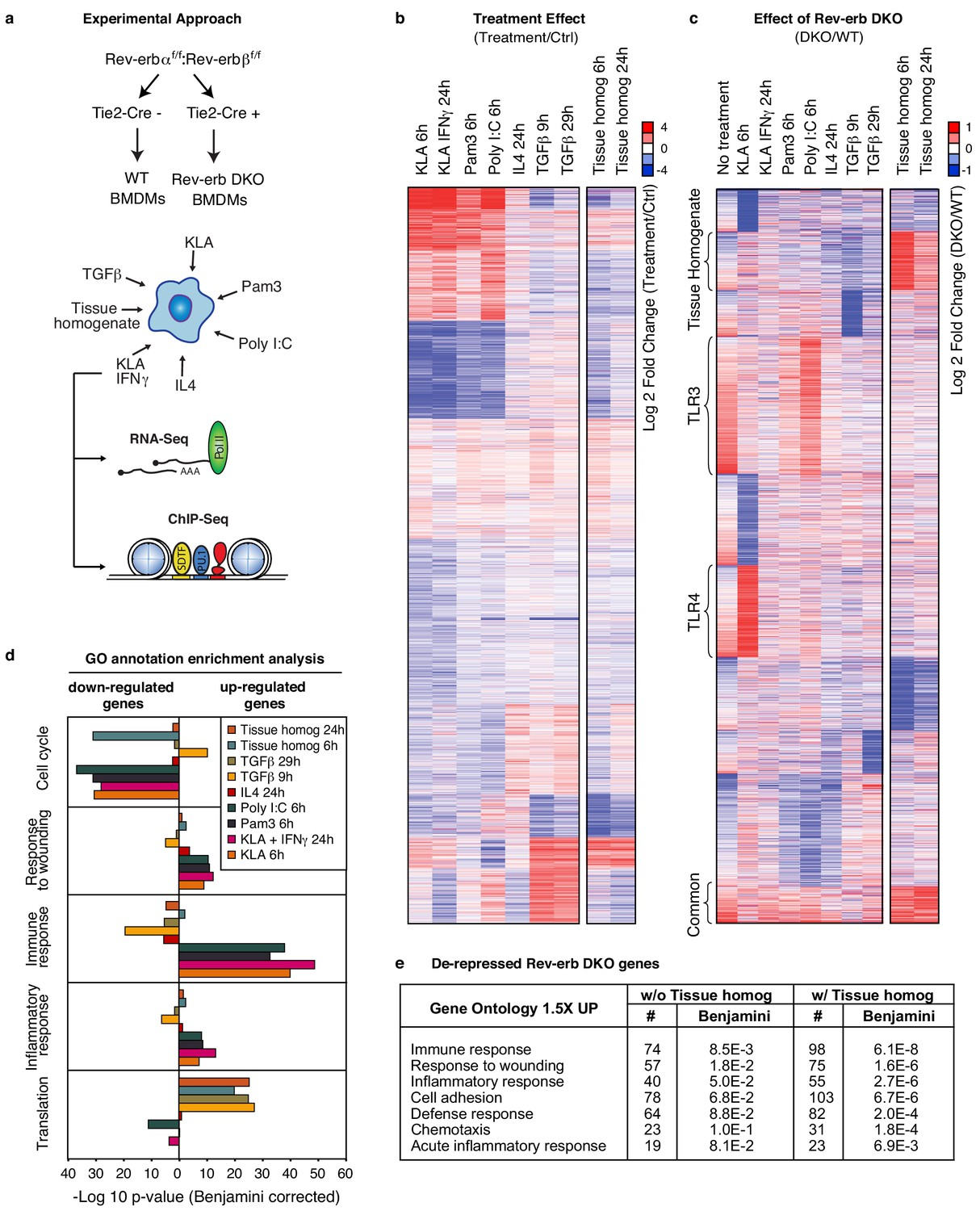 Tissue Damage Drives Co Localization Of Nf B Smad3 And Nrf2 To Simple Circuit Diagram For Detecting Loss 4 20 Ma Signal Overall Impact Rev Erb Dko On Dependent Gene Expression