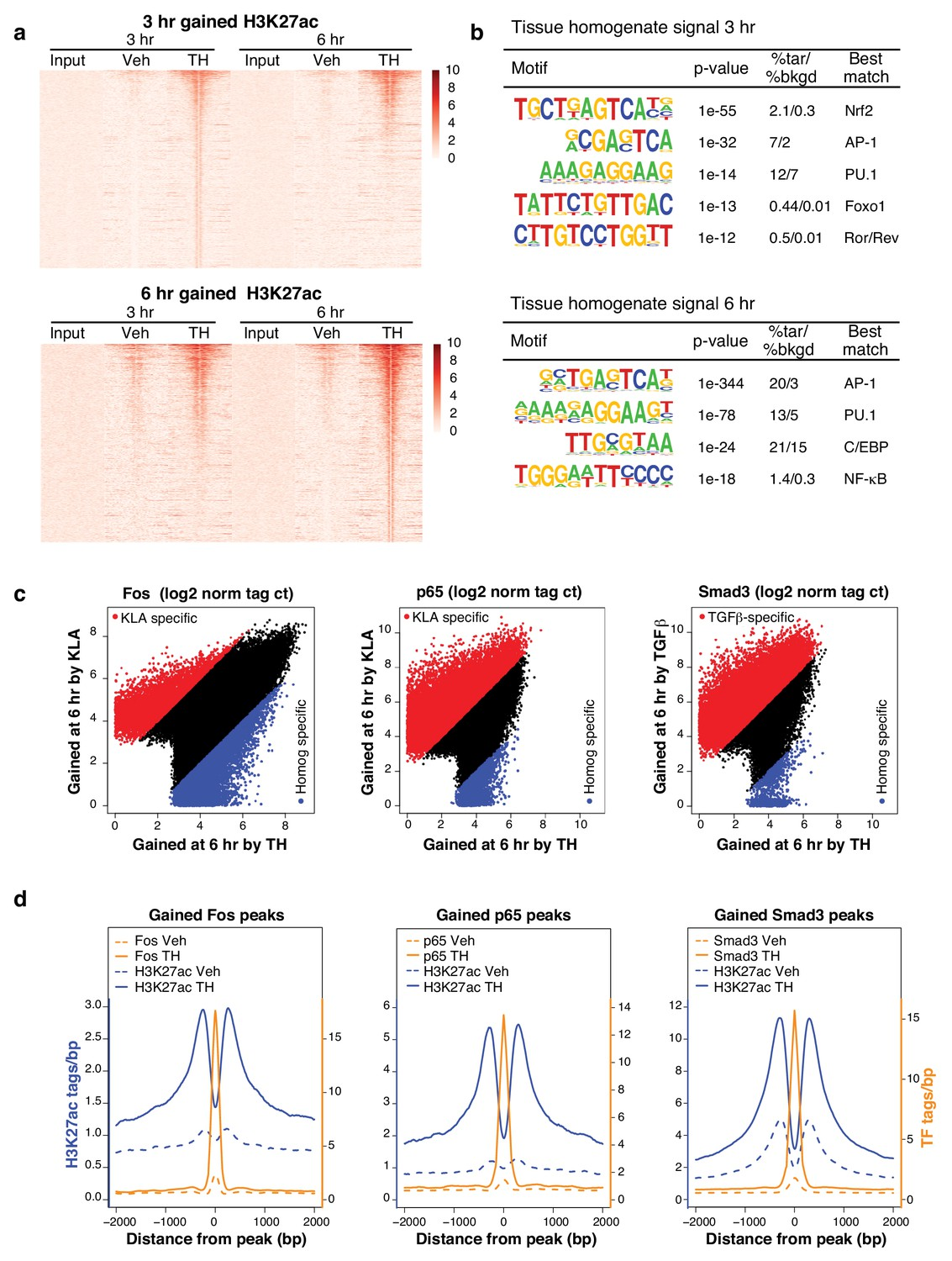 Tissue damage drives co-localization of NF-κB, Smad3, and