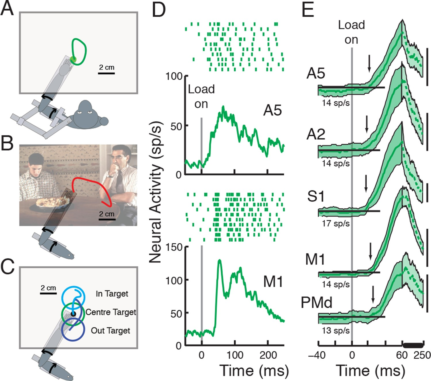Distributed Task Specific Processing Of Somatosensory Feedback For Dc Wiring Diagram Atlas Point Motor Behavioral Tasks And Perturbation Responses Across Cortical Areas