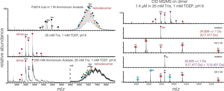 Molecular mechanism of activation-triggered subunit exchange