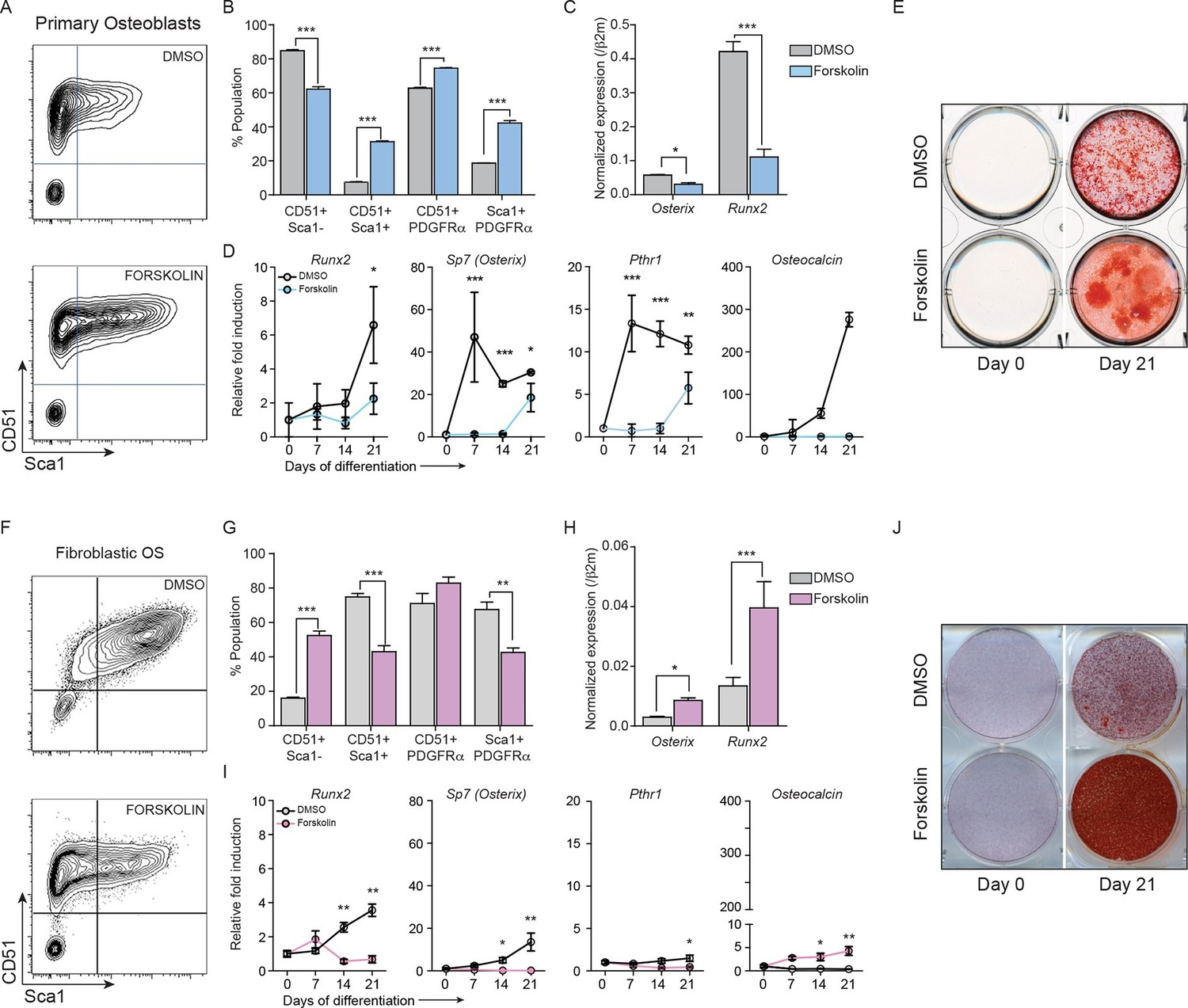 Consutively Elevated Camp Differentially Affects Primary Osteoblasts And Osteosarcoma Cells