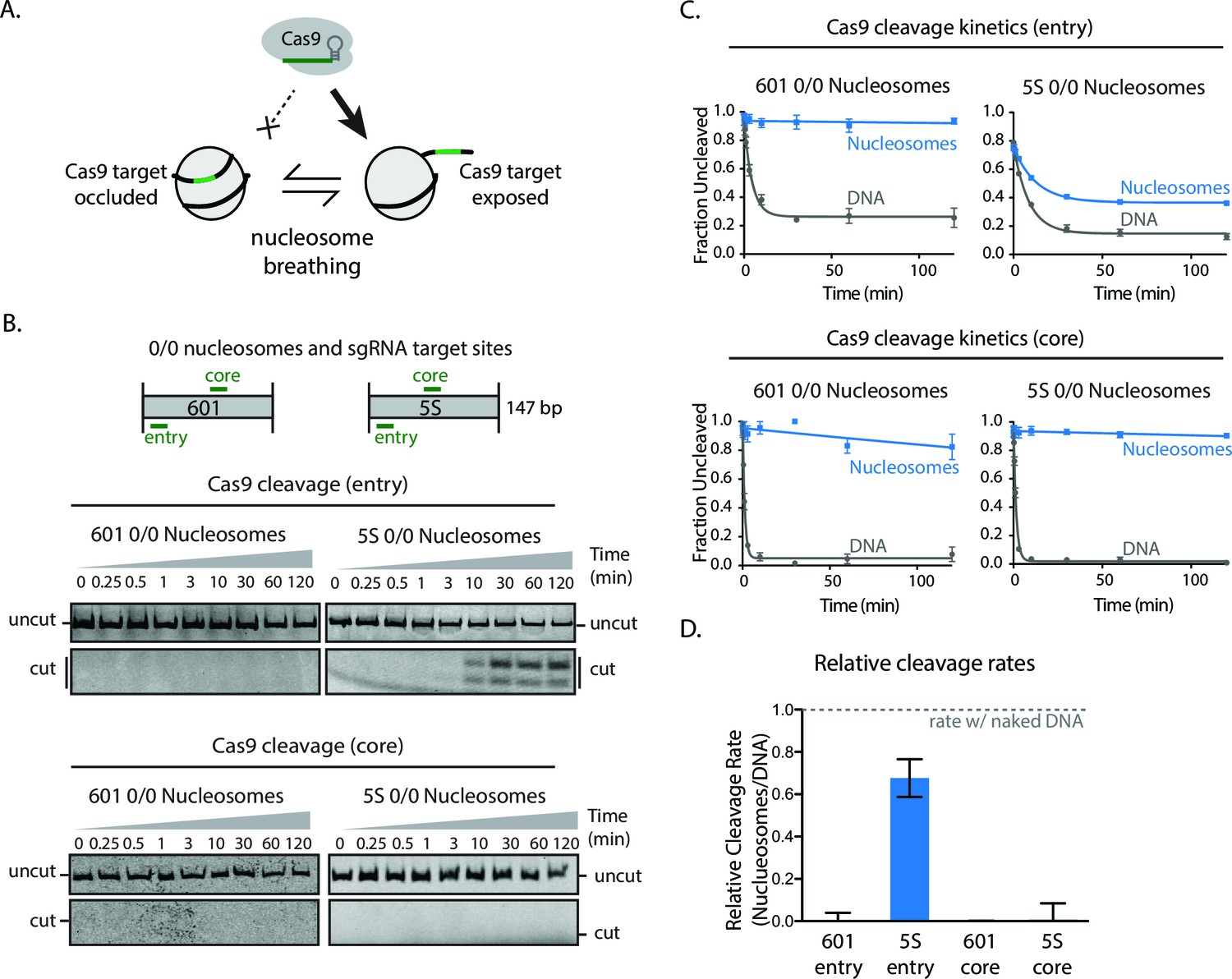 Nucleosome Breathing And Remodeling Constrain Crispr Cas9 Function No Disassemble Stephanie Because To Be Disassembled Is Dead That Higher Nucleosomal Dynamics Enhance Cleavage