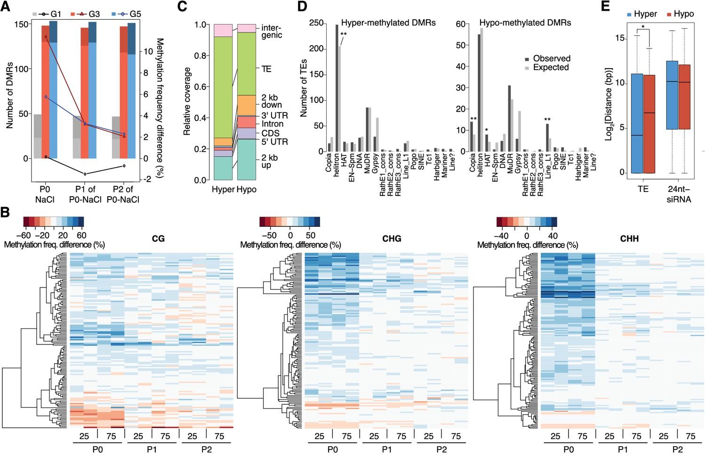 Hyperosmotic stress memory in Arabidopsis is mediated by distinct