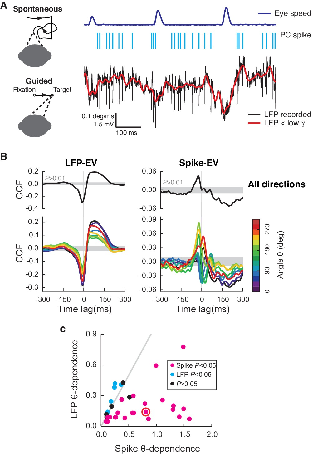 Multiplexed Coding By Cerebellar Purkinje Neurons Elife Figure 2 Basic Structure Of The Neuronal Circuitry In Cerebellum Lfp And Pc Spikes Correlate Differently With Saccadic Eye Movements