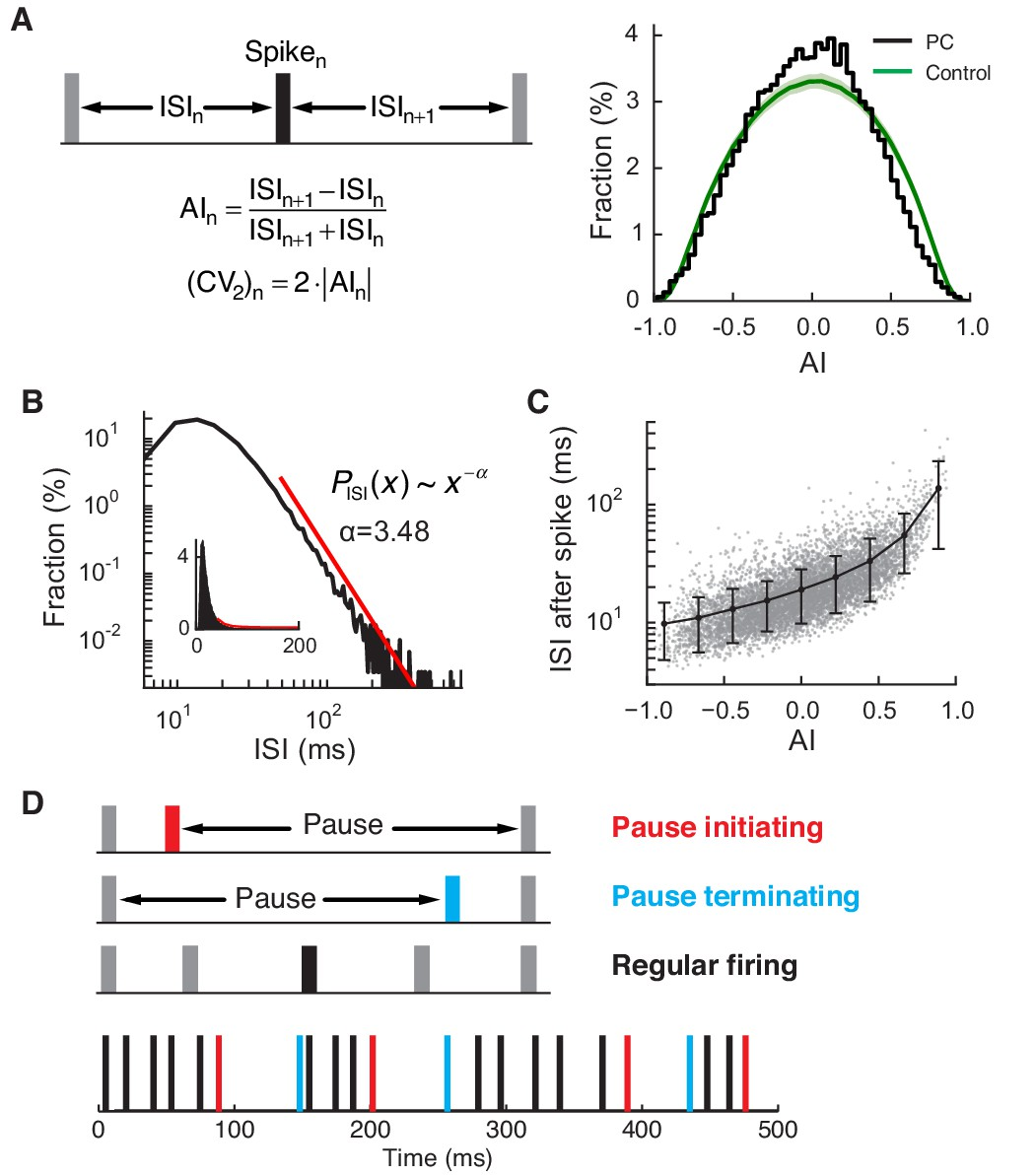 Multiplexed Coding By Cerebellar Purkinje Neurons Elife Above Is The Schematic Of Coil But You Can Also Find It On Steve Regular And Pause Spikes In Pc Spike Train