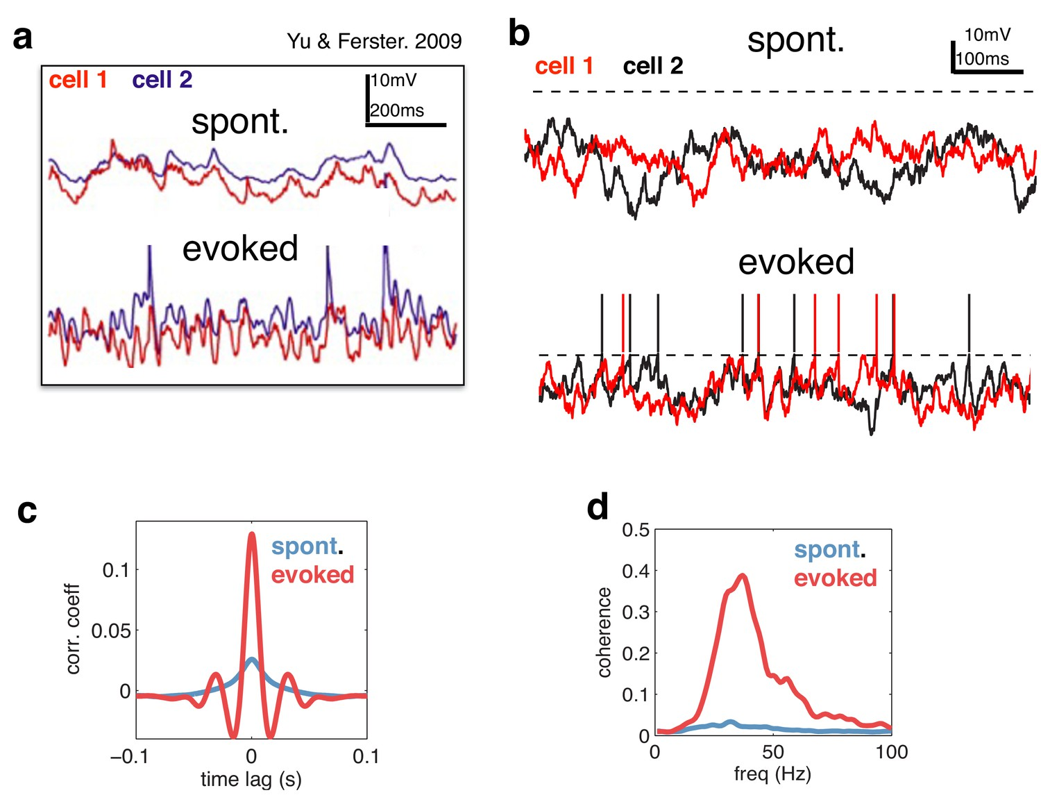 Neural oscillations as a signature of efficient coding in