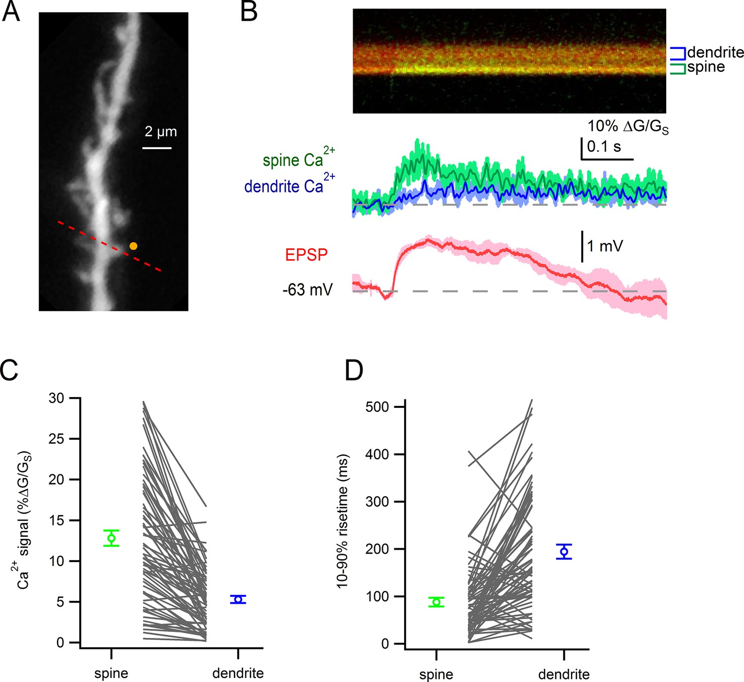 Electrical And Ca2 Signaling In Dendritic Spines Of Substantia Rc Circuits Archives Ap Physics C Glutamate Uncaging Evoked Responses