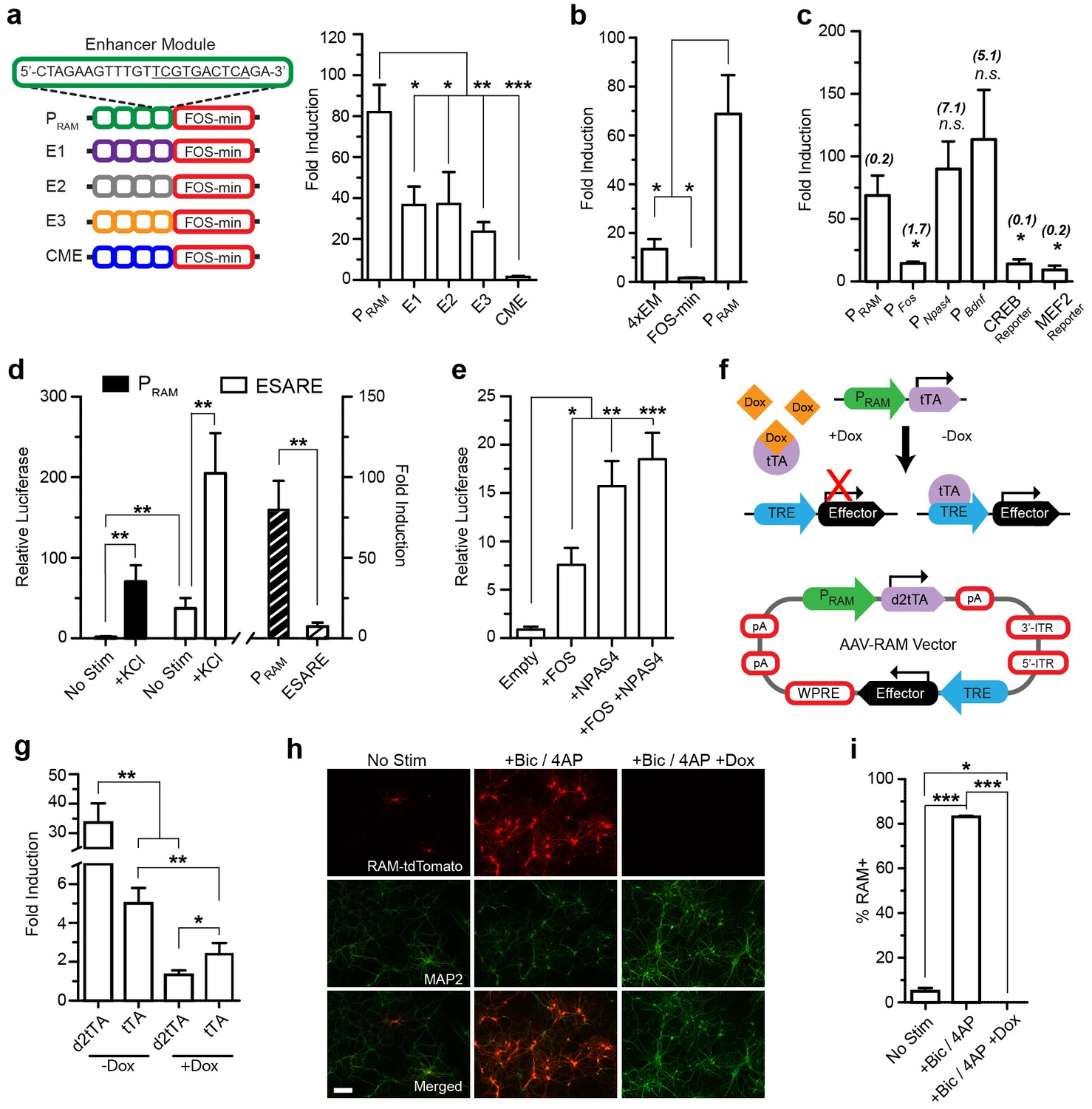 A Robust Activity Marking System For Exploring Active Neuronal Diagram In Addition Traffic Along With Ex Le Of Signal Wiring Design And Characterization The Ram Promoter Pram Aav Based Vitro