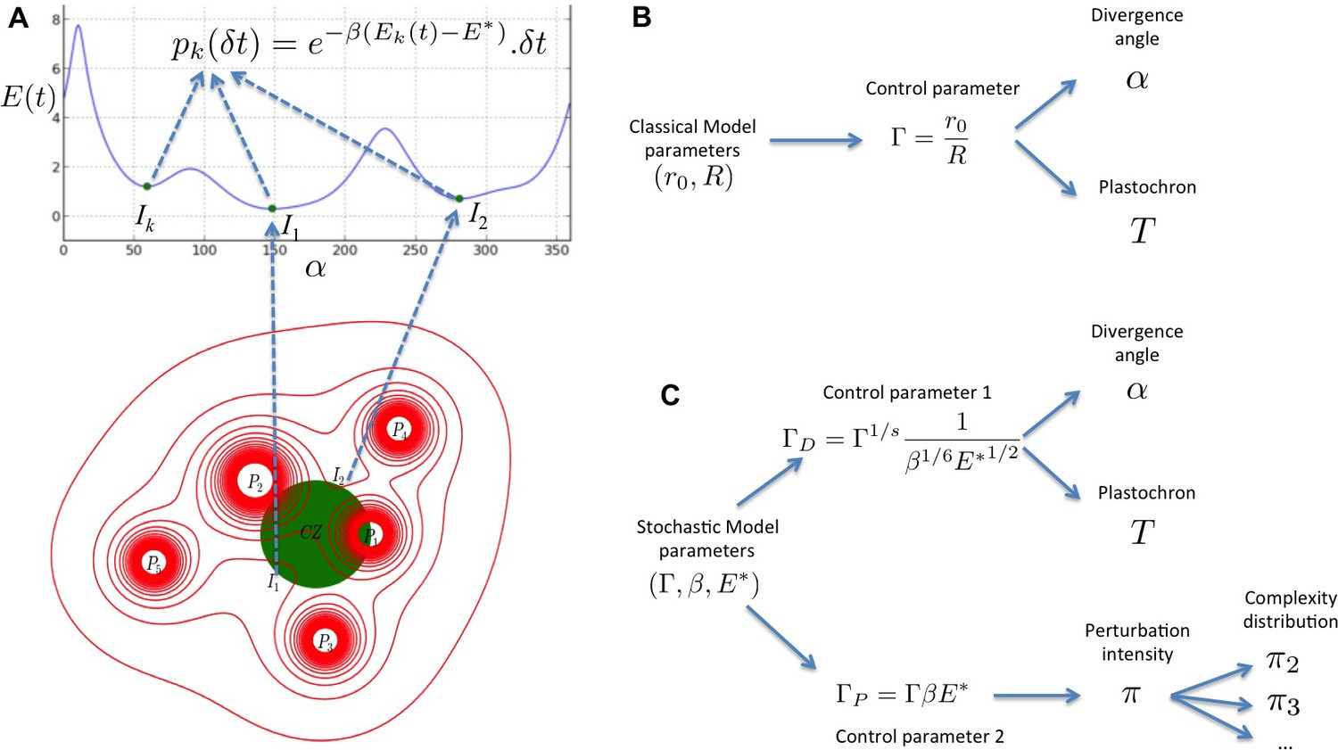 A Stochastic Multicellular Model Identifies Biological Watermarks Simple Eyeball Diagram 154 The Structure Of