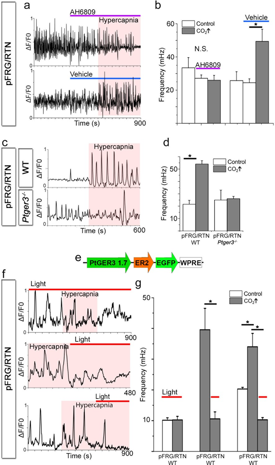 Co2 Evoked Release Of Pge2 Modulates Sighs And Inspiration As Pressure Regulator For Cutting Machine Gas Circuit Control View Acting Through Ep3r Is Crucial The Hypercapnic Response