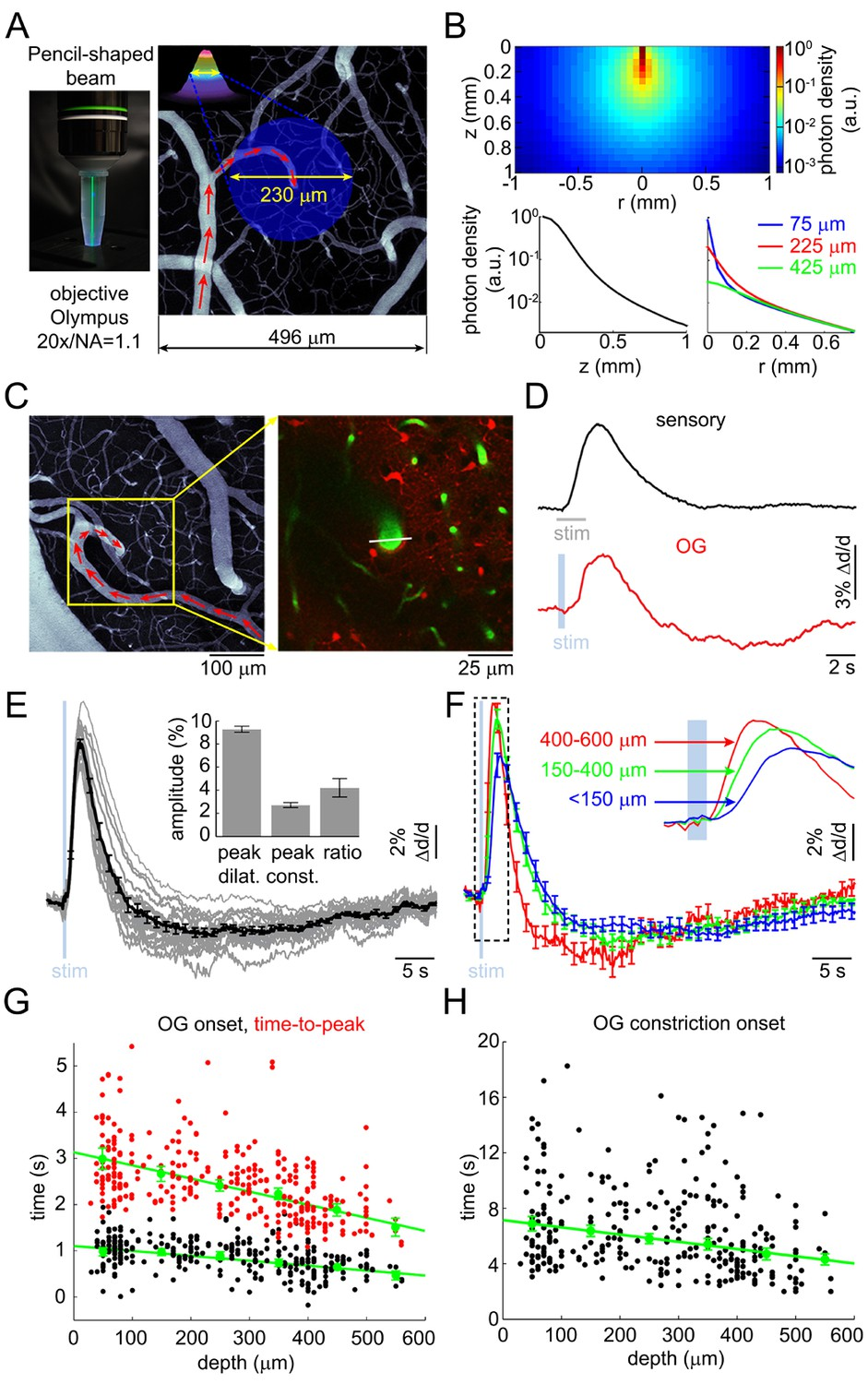 Cell Type Specificity Of Neurovascular Coupling In Cerebral Cortex 12 V Wiring Diagram 350 Cc 500 Us Canada Version Arteriolar Response To Og Stimulation Ins