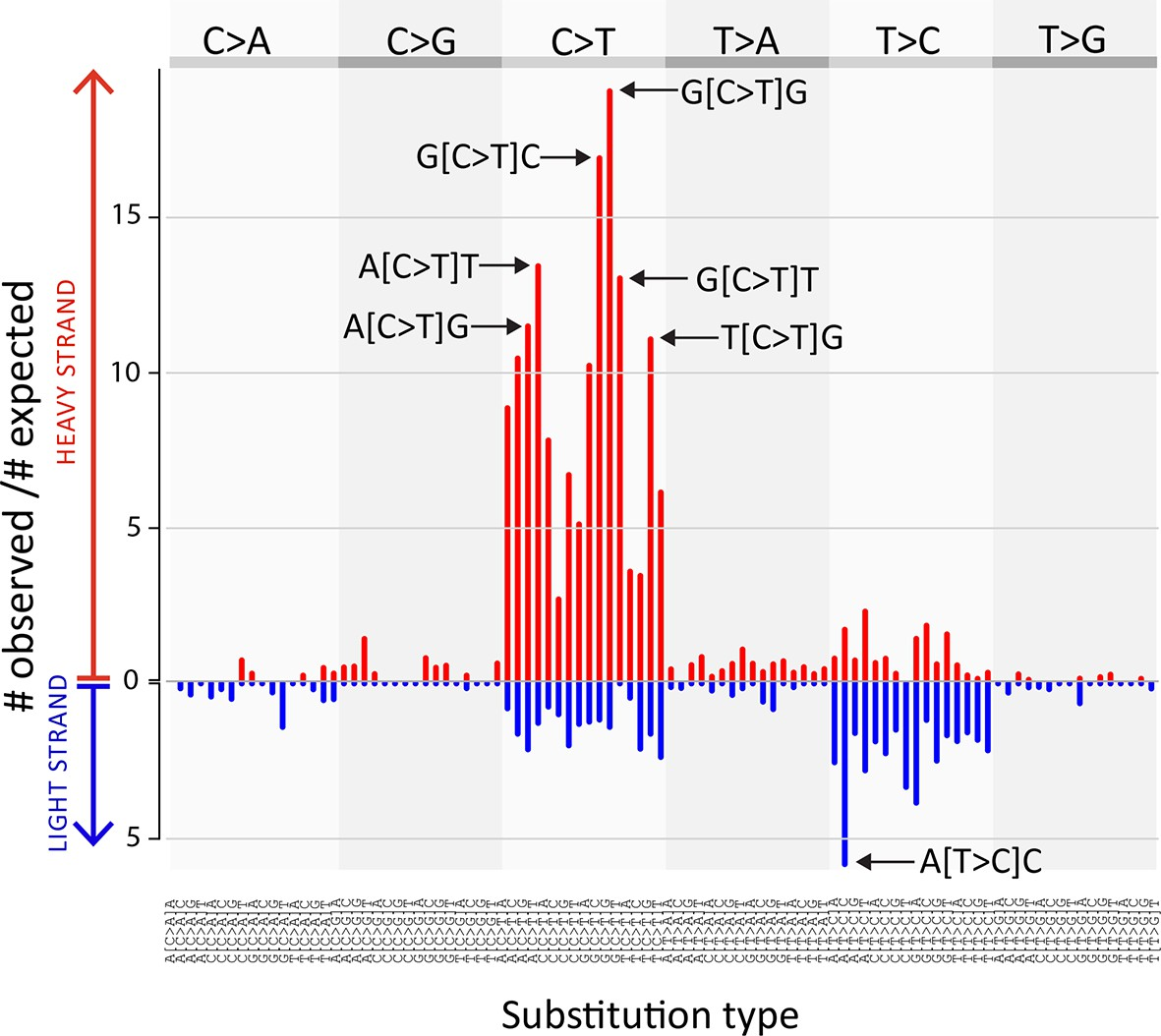 Mitochondrial genetic diversity, selection and recombination in a