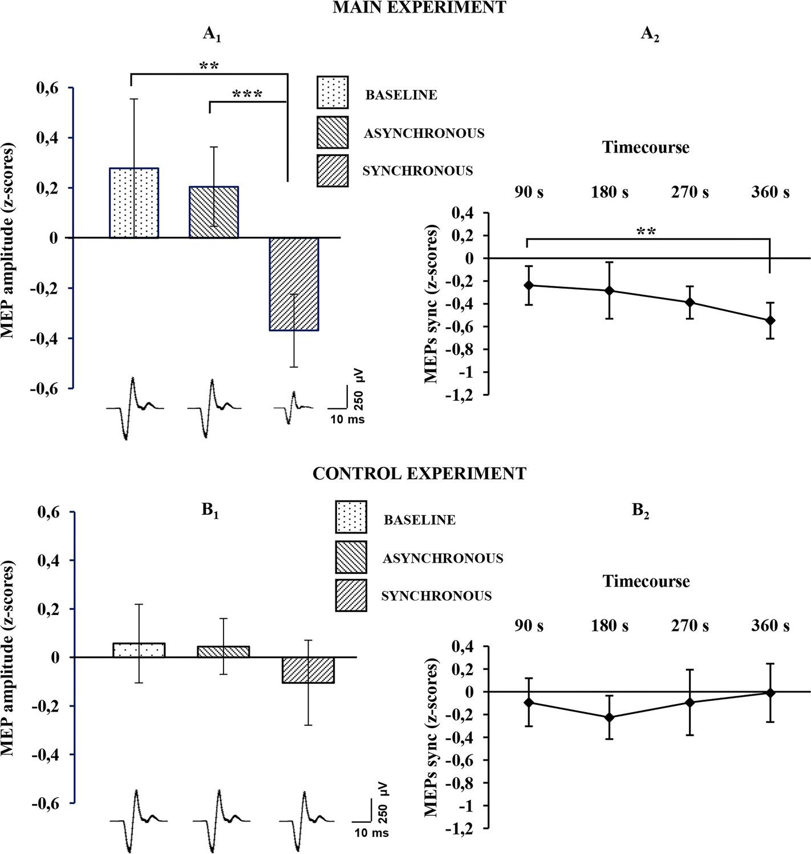 Decreased motor cortex excitability mirrors own hand