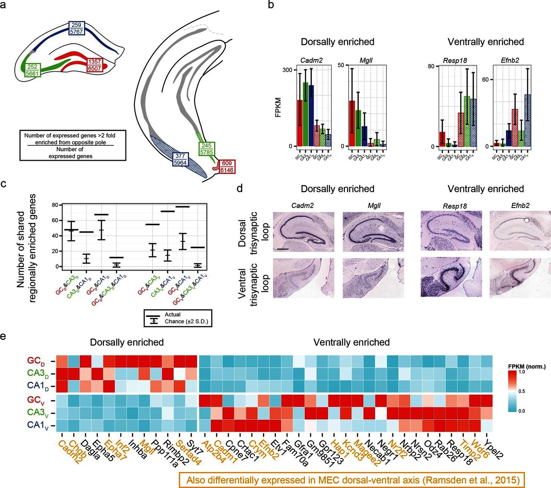 Hipposeq: A Comprehensive RNA-seq Database Of Gene