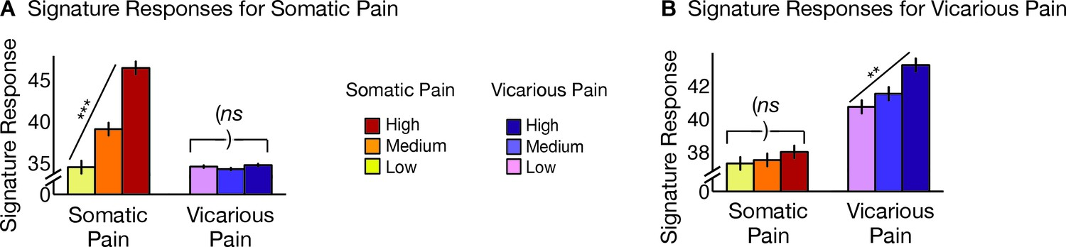 Somatic and vicarious pain are represented by dissociable