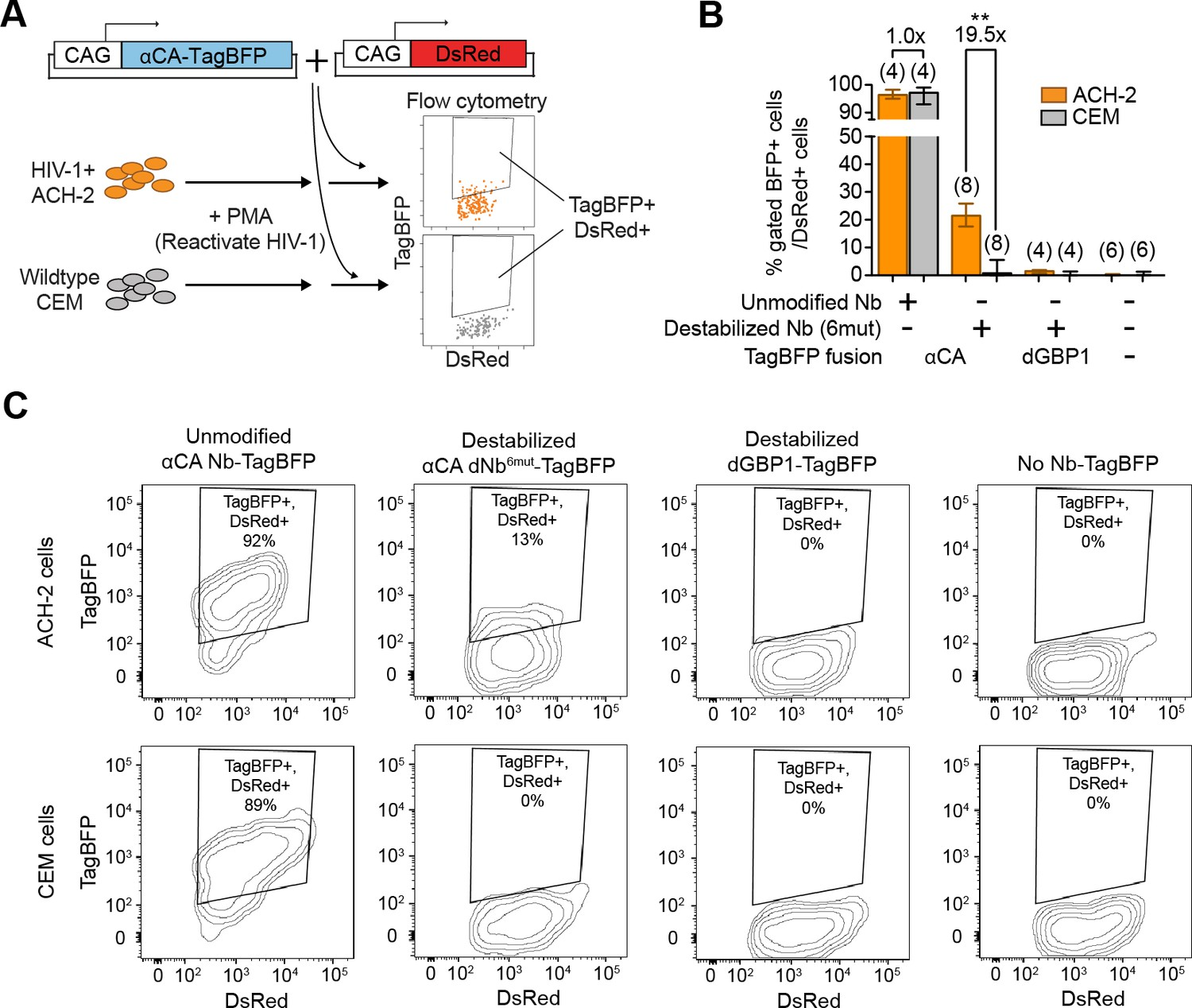 Detection And Manipulation Of Live Antigen Expressing Cells Using Envelope Detector One Circuit A Week Hiv 1 Reactivated With Ca Specific Sensor