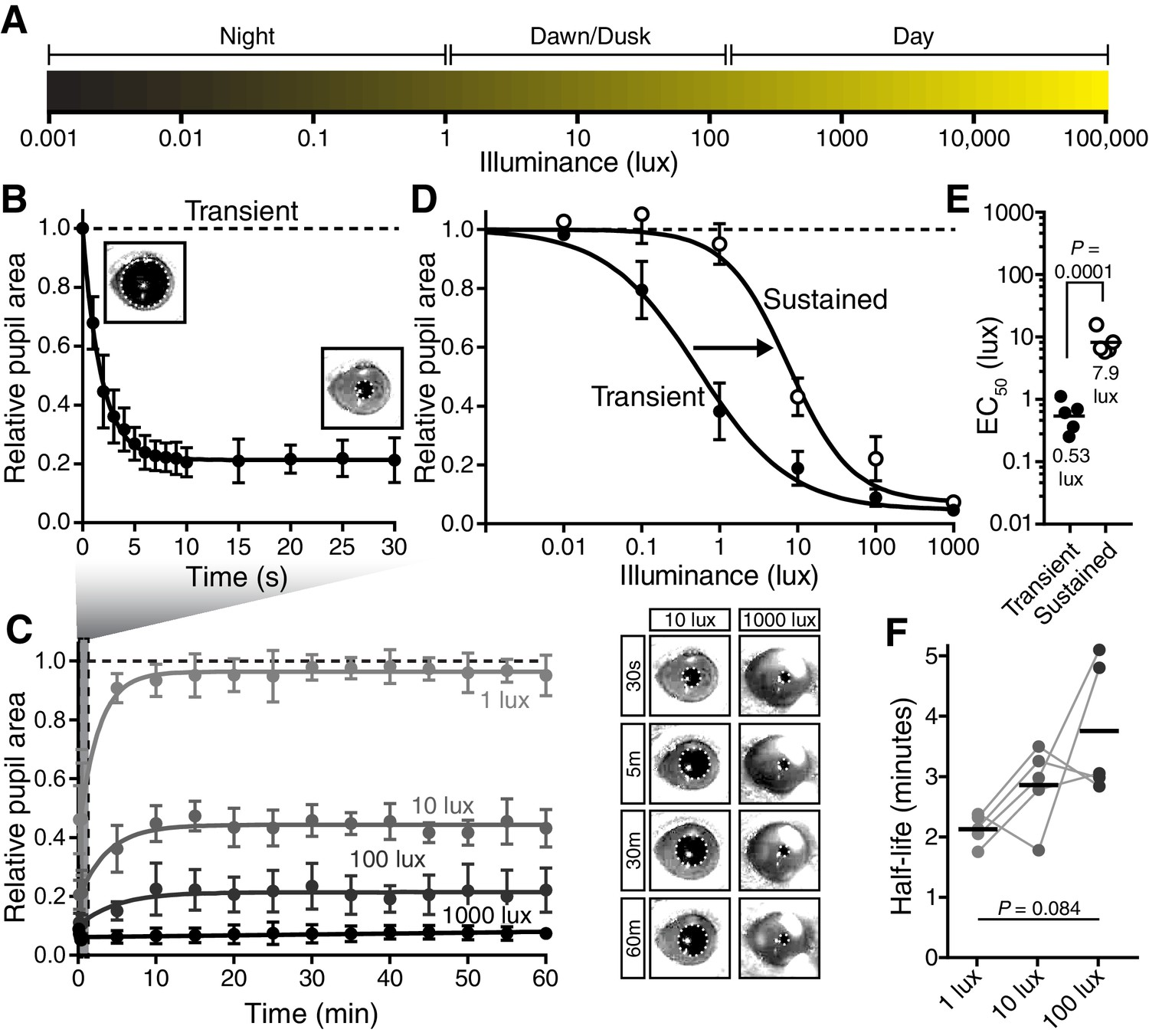 A Visual Circuit Uses Complementary Mechanisms To Support Transient Pole Diagram Moreover Single Switch With Two Lights On 2 The Pupillary Light Response Contains Phases And Sustained