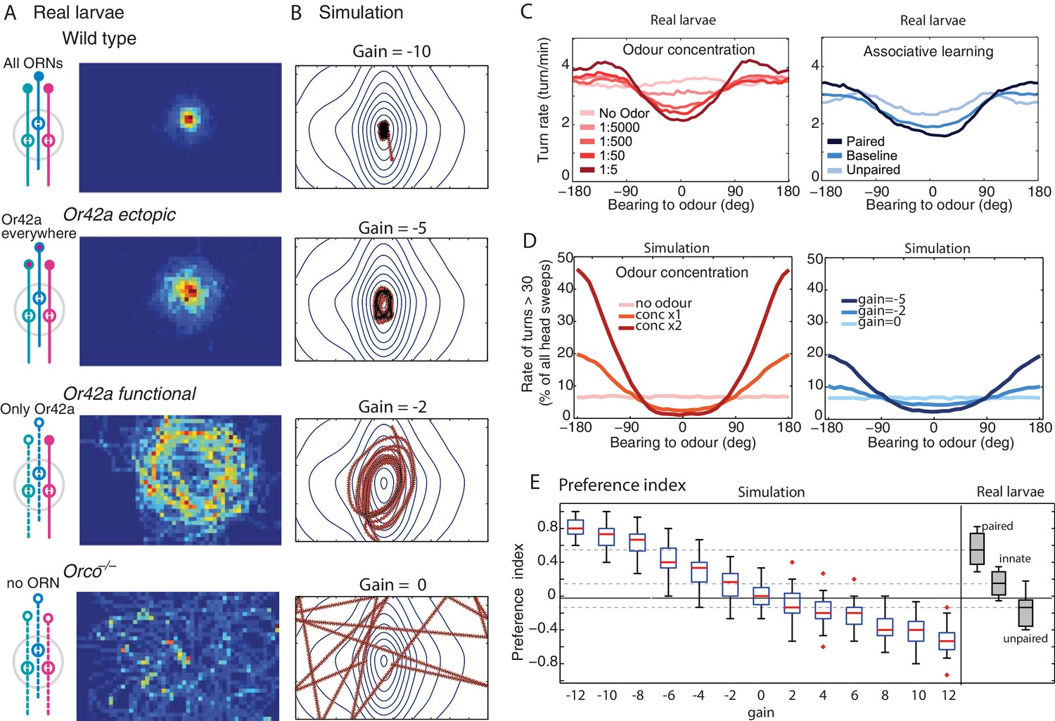 Continuous Lateral Oscillations As A Core Mechanism For Taxis In Figure 2 10d Basic Armstrong Oscillator Circuit Modulation Of The Chemotactic Response