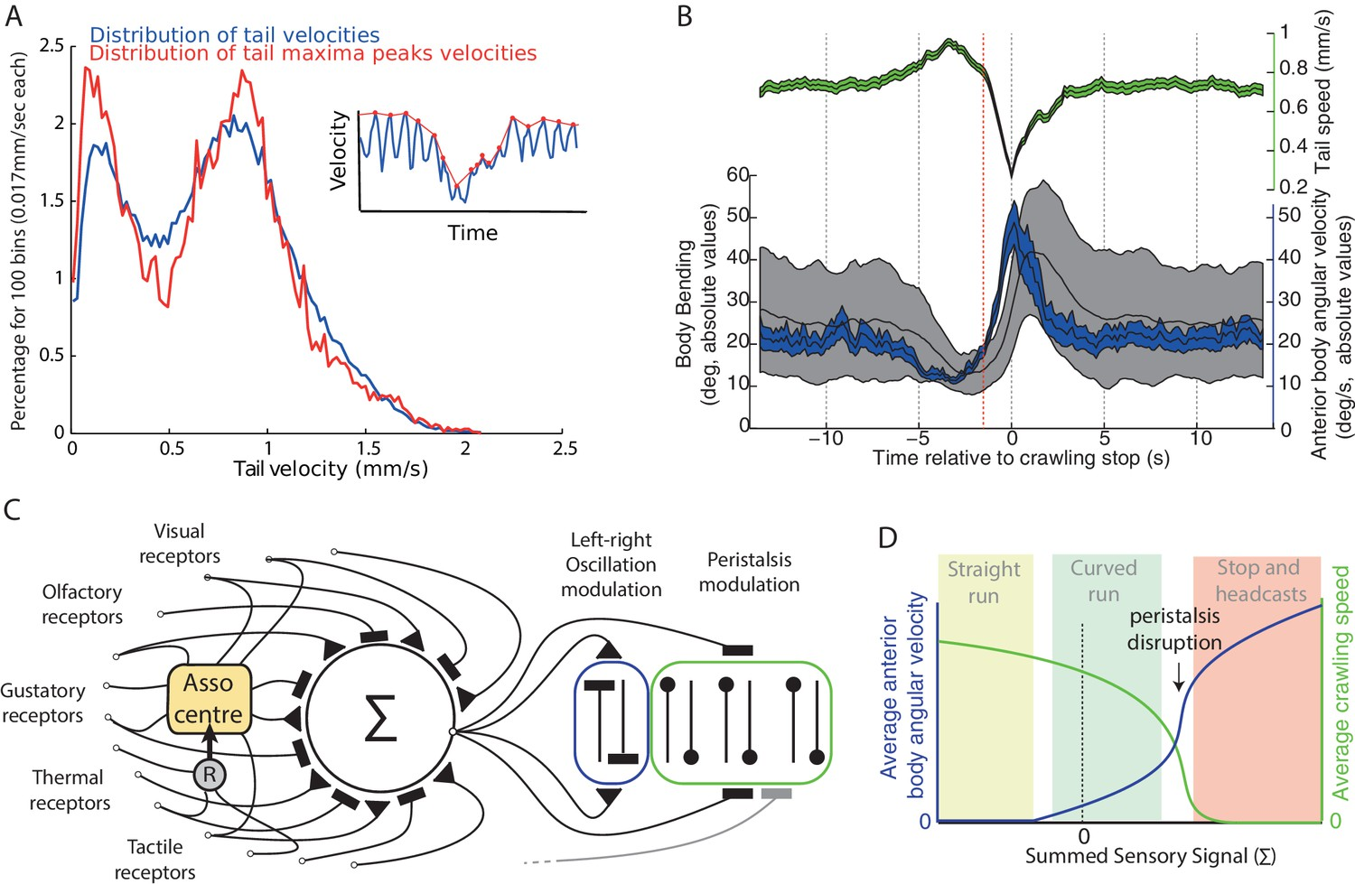 Continuous lateral oscillations as a core mechanism for