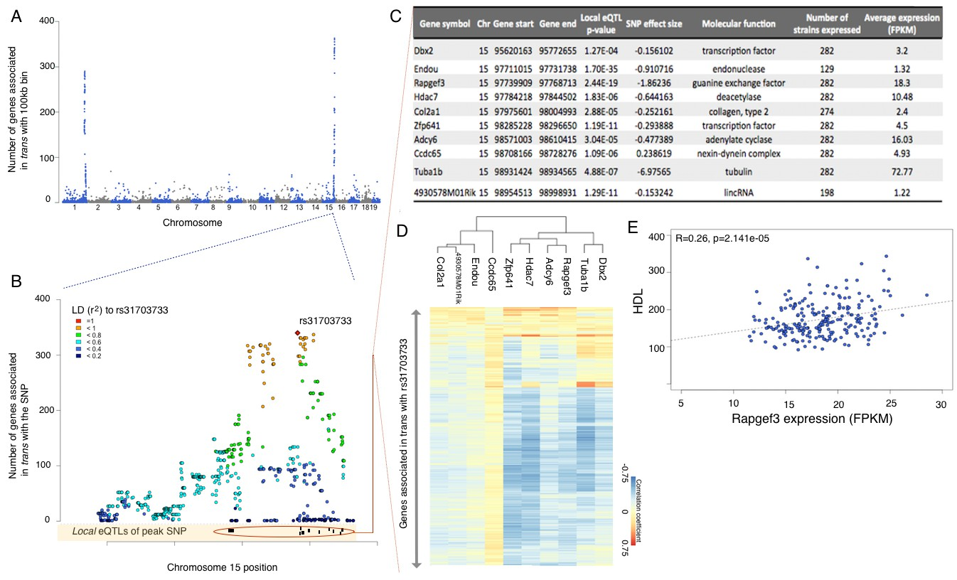Hypothalamic transcriptomes of 99 mouse strains reveal trans