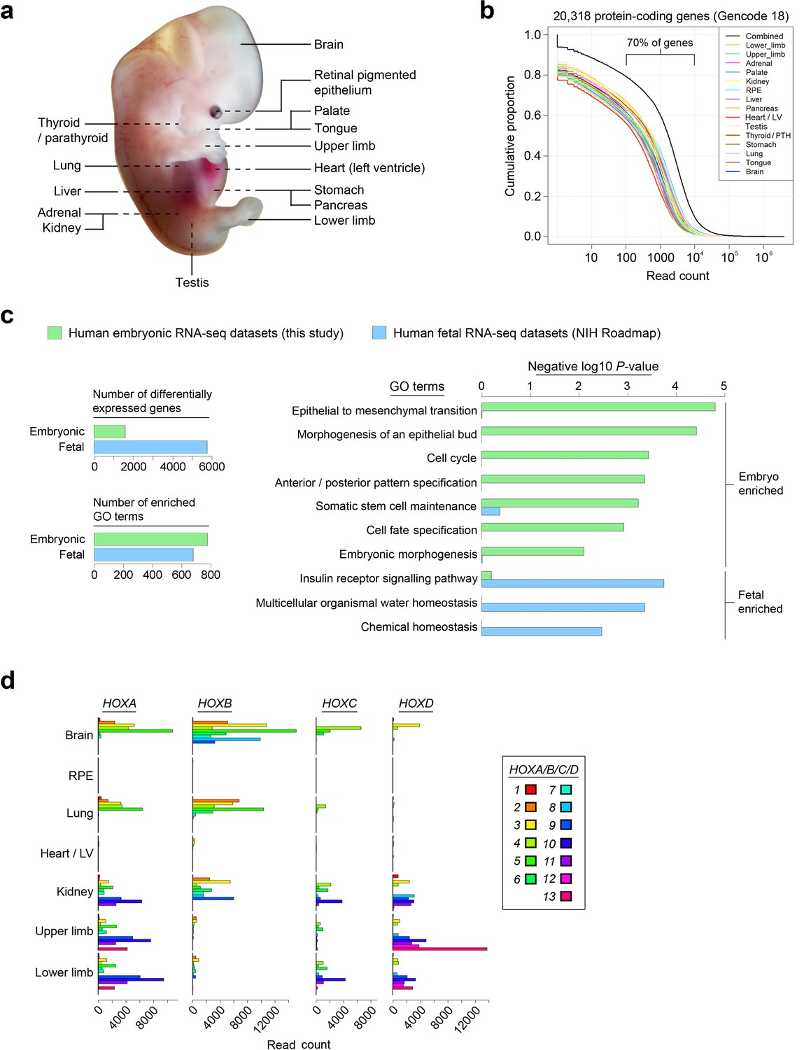 an integrative transcriptomic atlas of organogenesis in