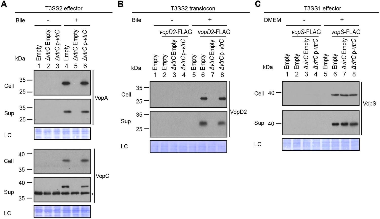 Bile Salt Receptor Complex Activates A Pathogenic Type Iii Secretion