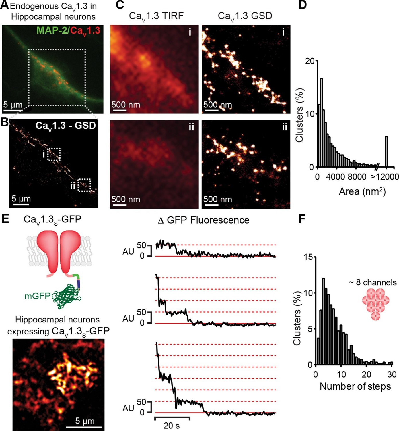 Ca2+ entry into neurons is facilitated by cooperative gating