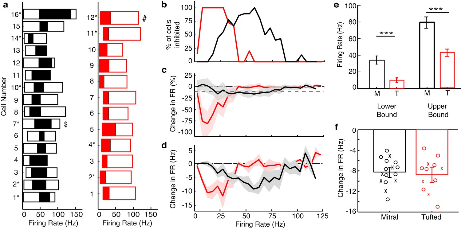 Distinct Lateral Inhibitory Circuits Drive Parallel Processing Of This Is Not So For A Circuit Bulbs Can Continually Be Added Summary Results Show That Tcs Are Influenced By Inhibition At Low Rates While Mcs Intermediate