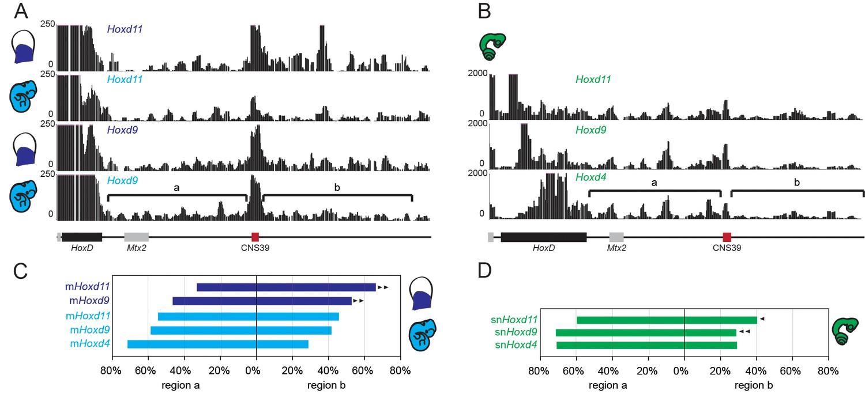 Reorganisation Of Hoxd Regulatory Landscapes During The Evolution Back Gt Gallery For Snake Skull Diagram 4c Seq In Telomeric Gene Desert Mouse And Tissue