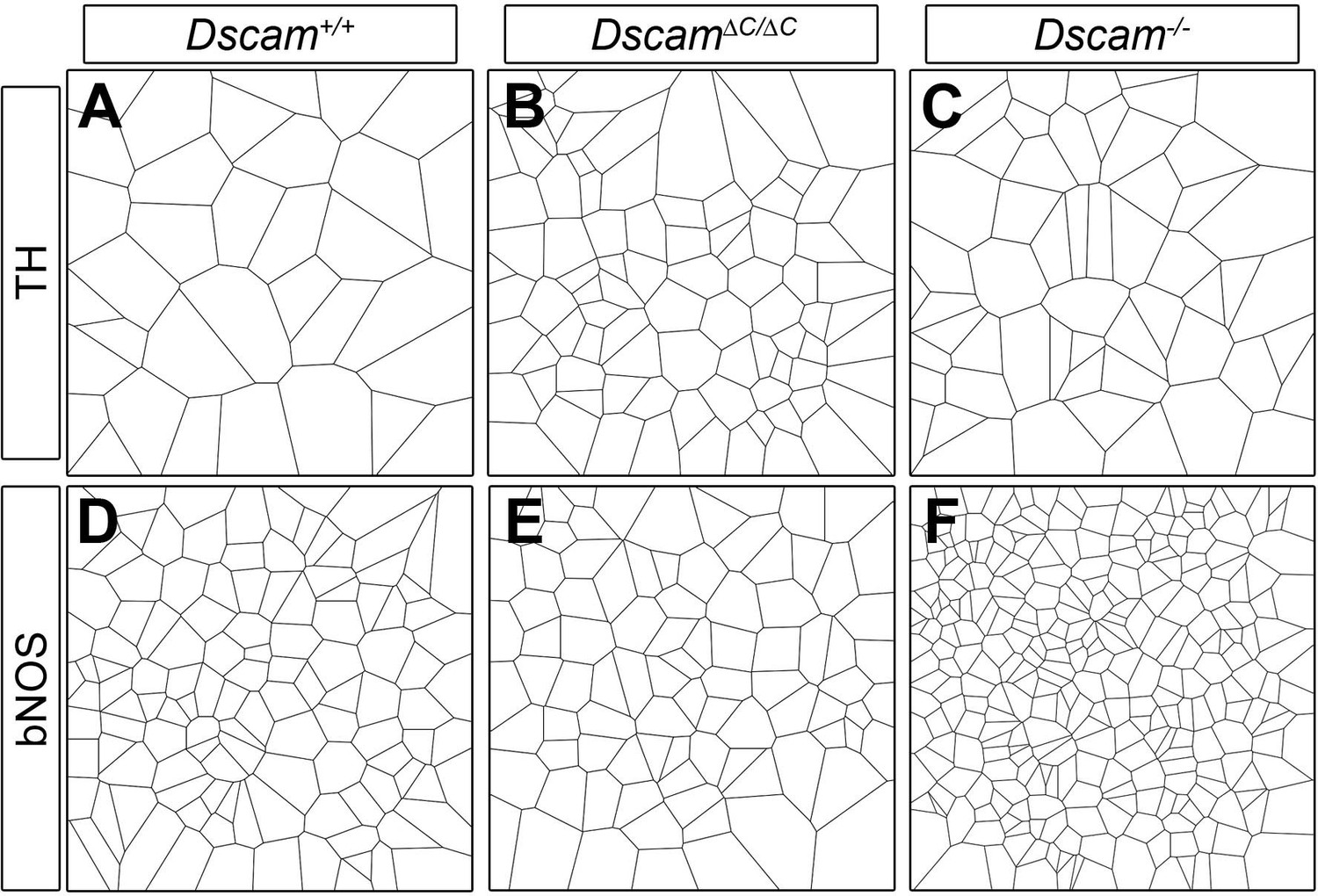 Replacing The Pdz Interacting C Termini Of Dscam And Dscaml1 With Garrett Ace 250 Wiring Diagram Examples Voronoi Tessellation Domains In Mutants