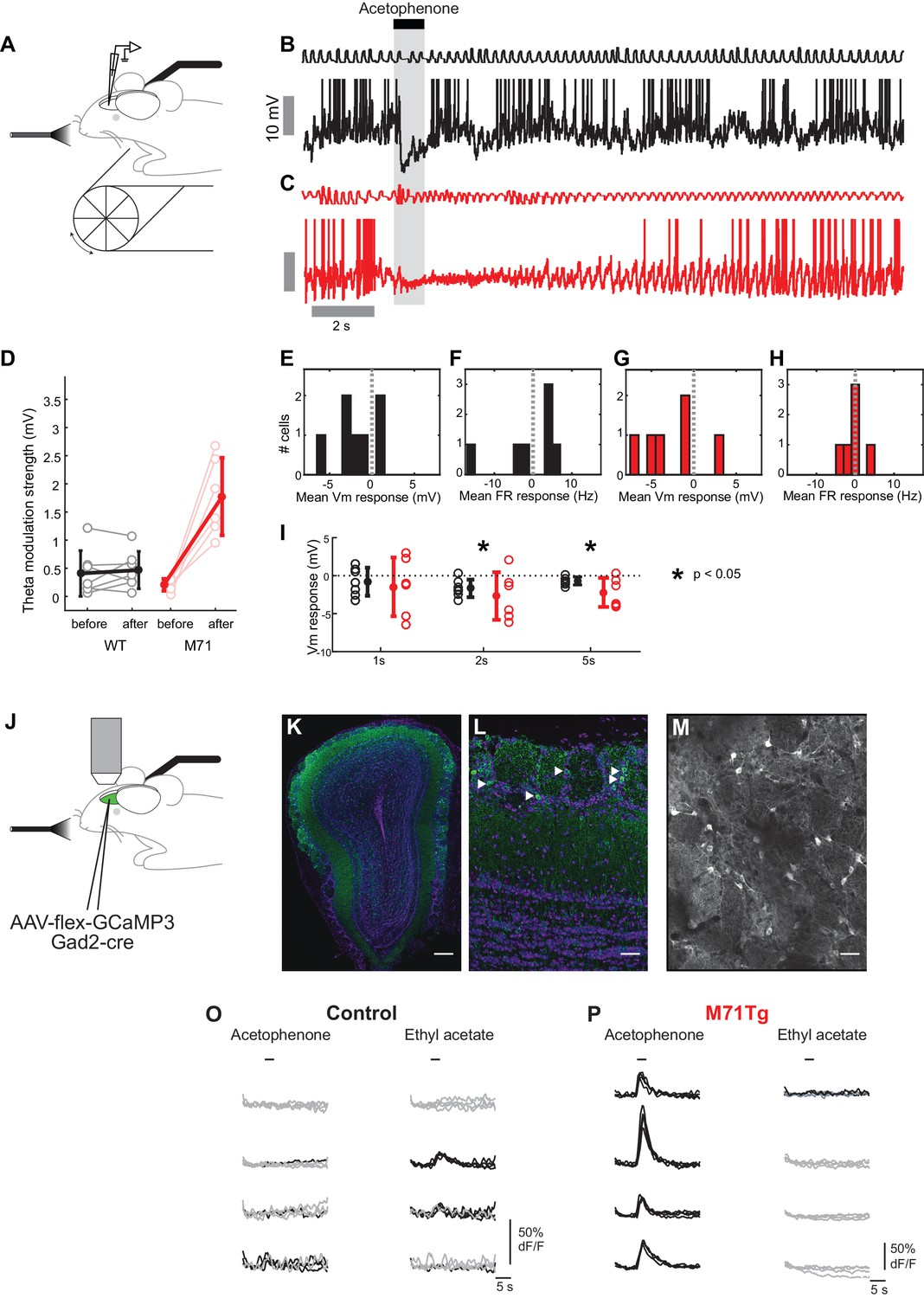 massive normalization of olfactory bulb output in mice with a