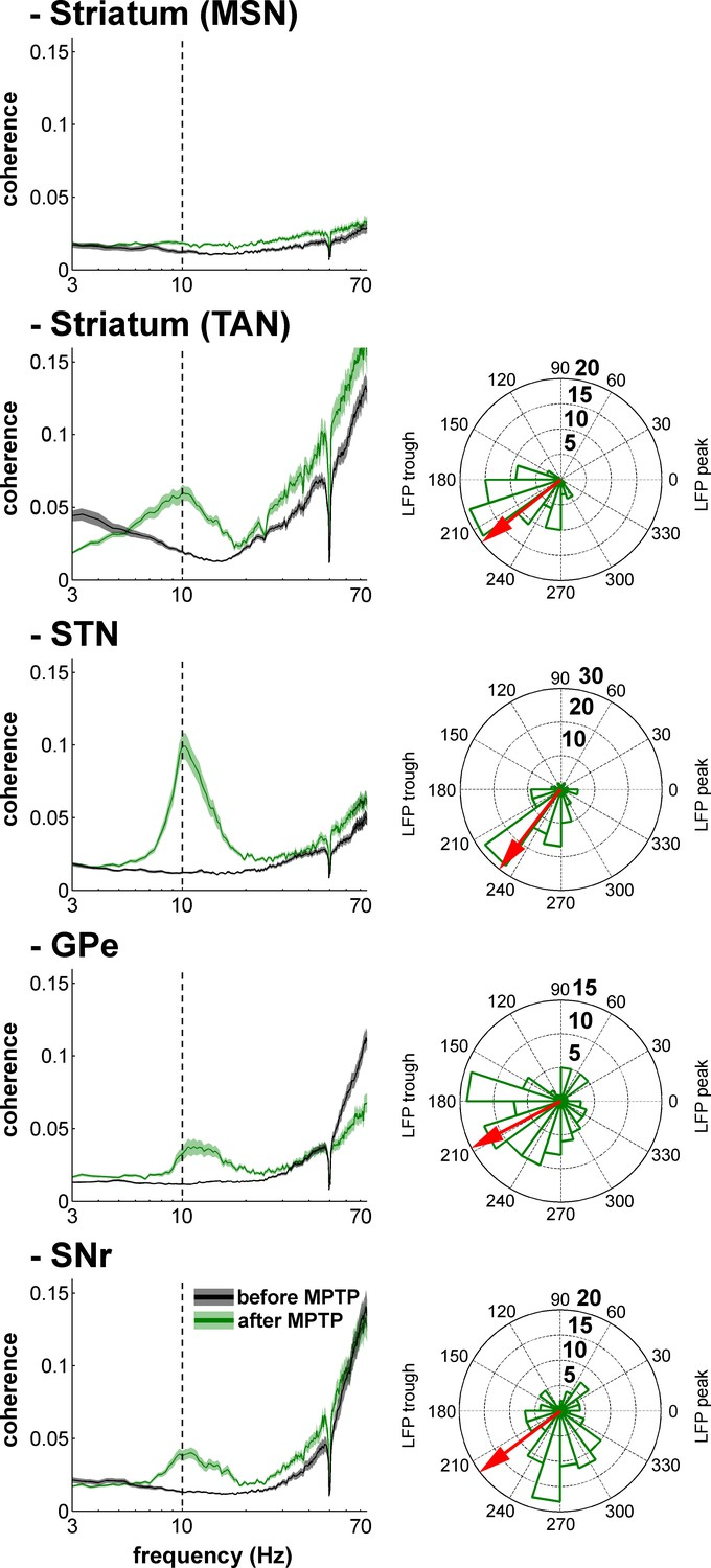 Subthalamic Not Striatal Activity Correlates With Basal Ganglia Ideas Bidirectional 33v 5v Level Shifter Single Unit Spiking And Lfp Synchronization For The Bg Neuronal Assemblies Before After Mptp Intoxication