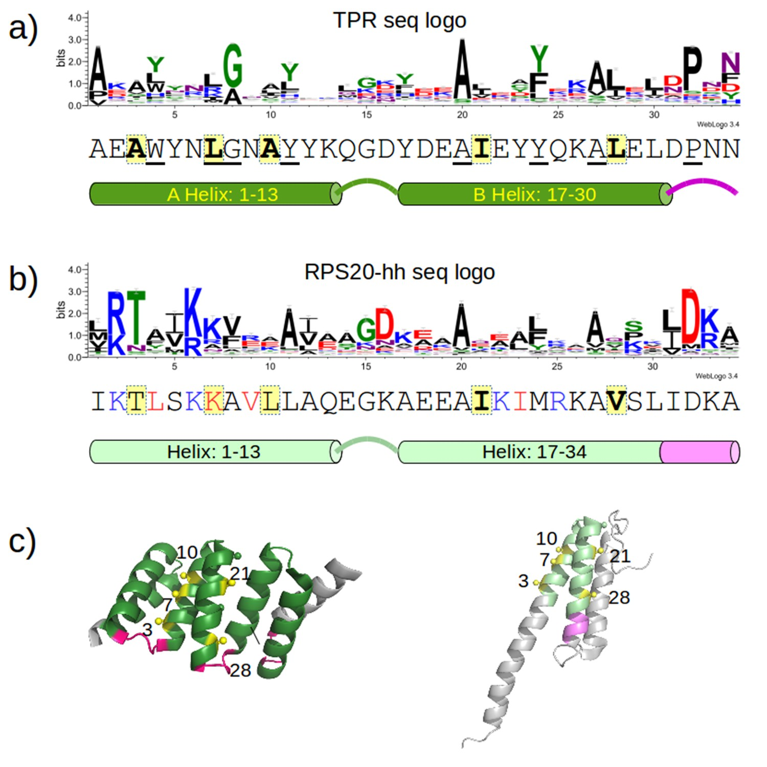 Origin Of A Folded Repeat Protein From An Intrinsically Disordered