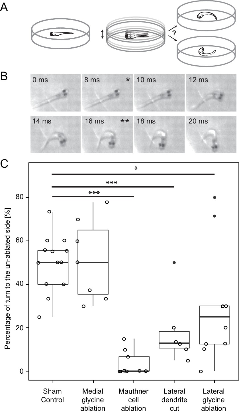 A Circuit Motif In The Zebrafish Hindbrain For Two Alternative Using Simple Rc Fill Up Column Labeledcalculation Response Laterality Of Control And Lesioned Fish To An Omnidirectional Stimulus