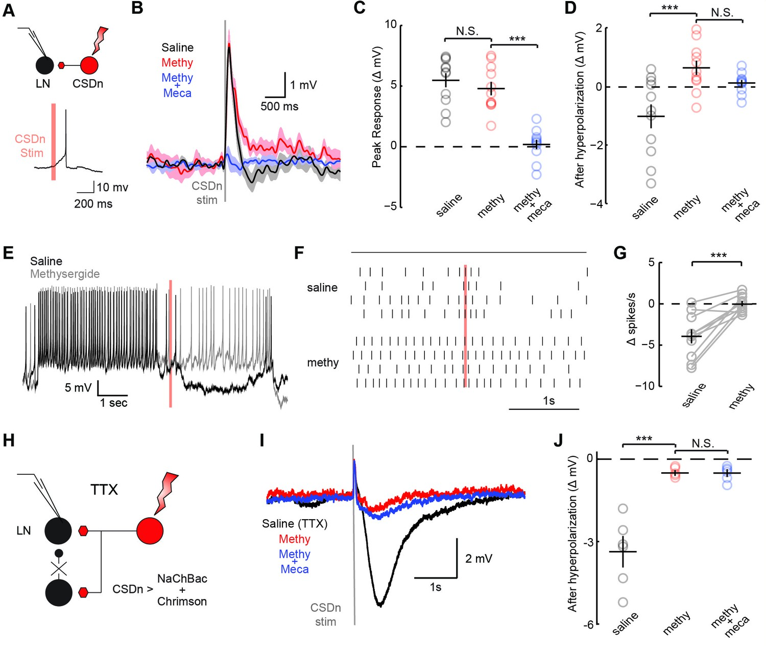 Functional Integration Of A Serotonergic Neuron In The Drosophila Data Logger Hall Effect Sensor Circuit Diagram Logo Iglesia Adventista Csdn Stimulation Monosynaptically Inhibits Lns And Polysynaptically Excites Them