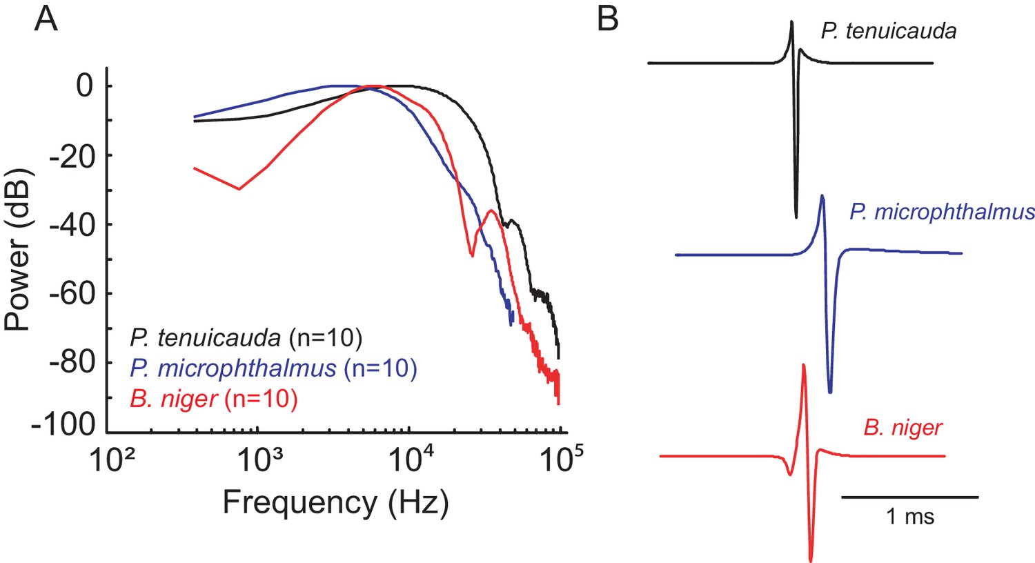 Detection Of Transient Synchrony Across Oscillating Receptors By The Fig 612 A Stabilized Basecontrolled Highfrequency Oscillator Frequency Content Relates To Duration Communication Signals In Pulse Type Mormyrids