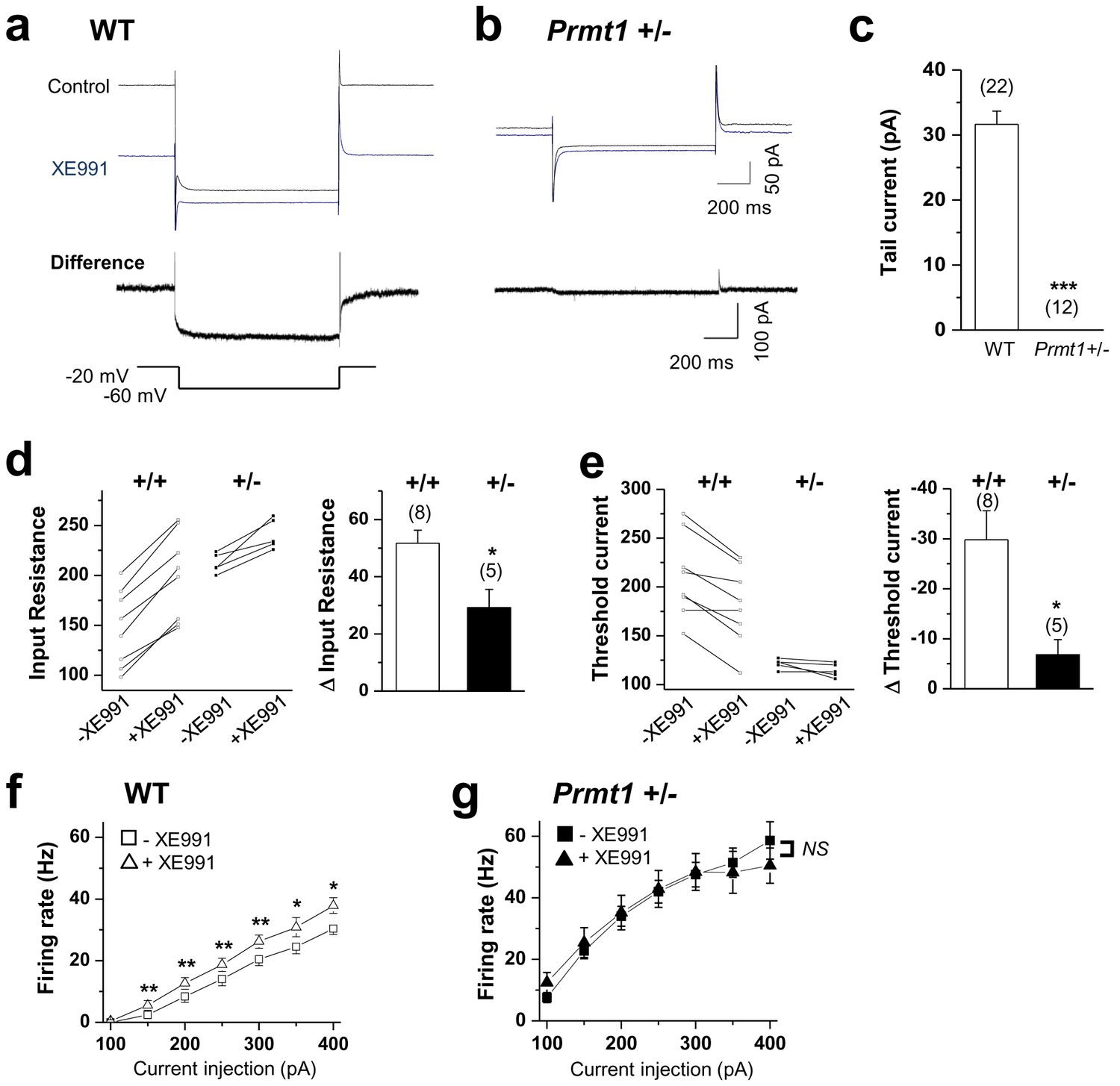 Protein Arginine Methylation Facilitates Kcnq Channel Pip2 Keywords Like Schematic Symbol For Heater Panel Other People Current Deficiency Contributed To The Persistent Hyperexcitability In Prmt1 Mice