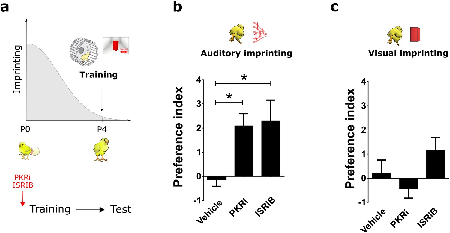 Translational Control Of Auditory Imprinting And Structural Bruno Trans Brake Wiring Diagram Reopening The Critical Period For Visual Through Eif2