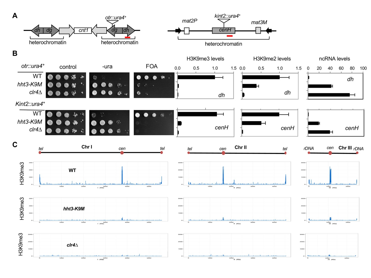 A histone H3K9M mutation traps histone methyltransferase