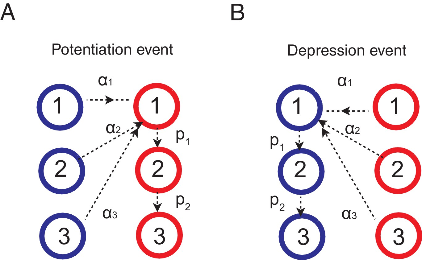 Adaptive Learning And Decision Making Under Uncertainty By Synaptic Electronic Circuits That Learn Forget Like Neural Rules For The Cascade Model Synapses