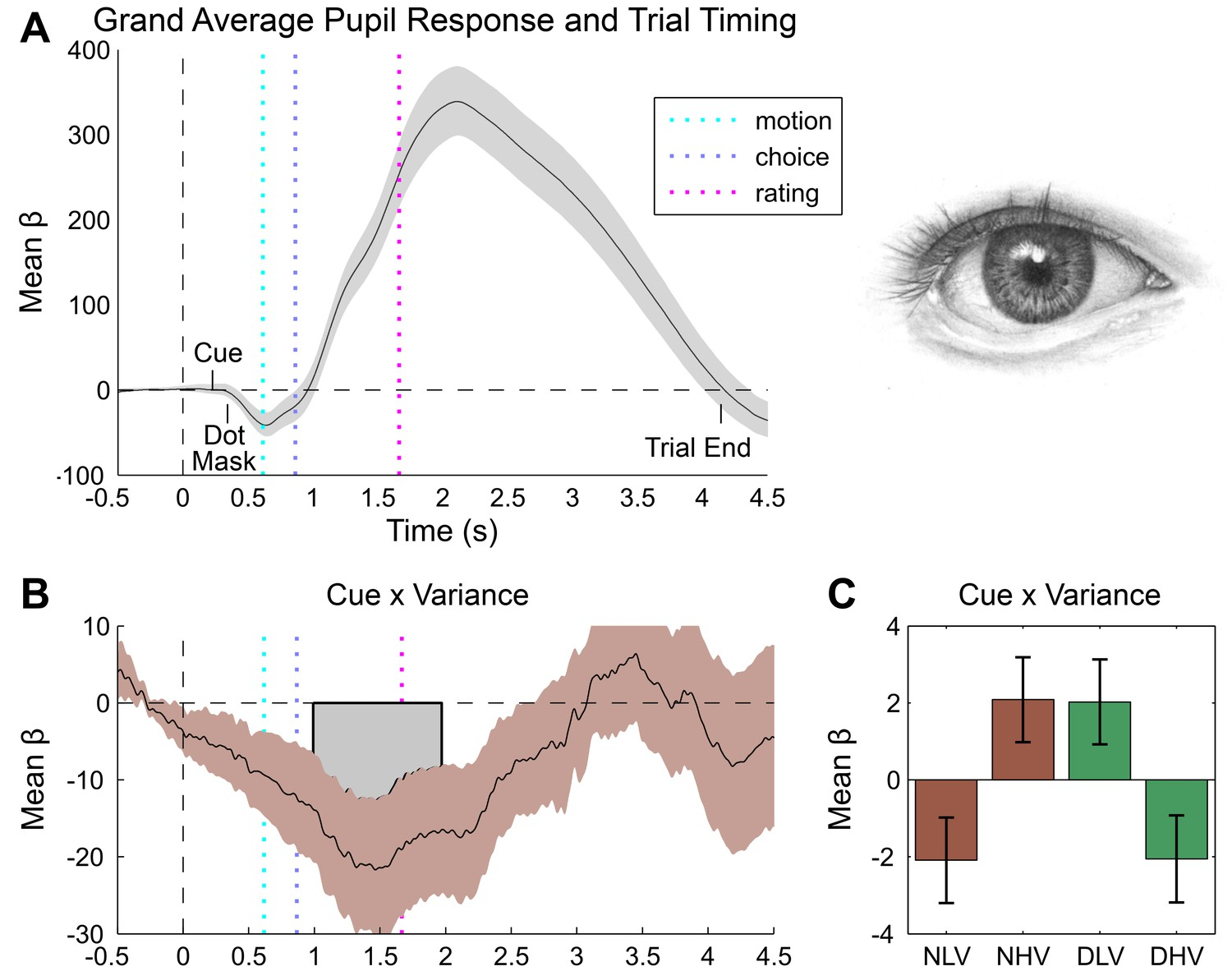 Unexpected Arousal Modulates The Influence Of Sensory Noise On Simple Eyeball Diagram 154 Structure Pupillometry Results
