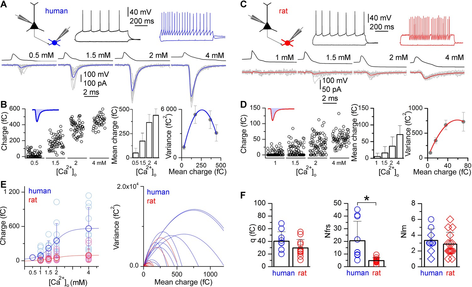 Human Pyramidal To Interneuron Synapses Are Mediated By Multi 1954 Chevrolet Ignition Switch Wiring Diagram Higher Number Of Functional Release Sites In Excitatory Is Revealed Multiple Probability Fluctuation Analysis