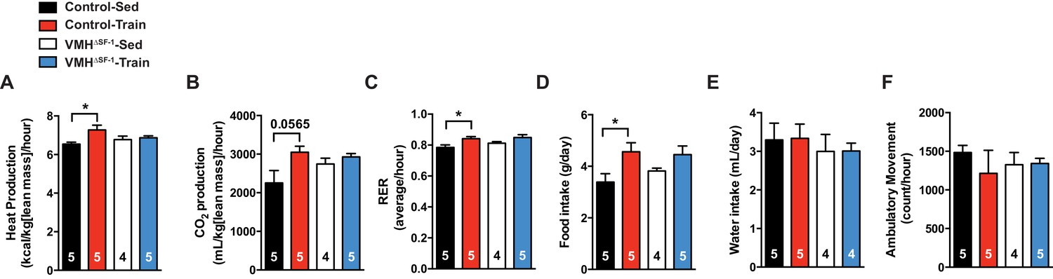 SF-1 expression in the hypothalamus is required for
