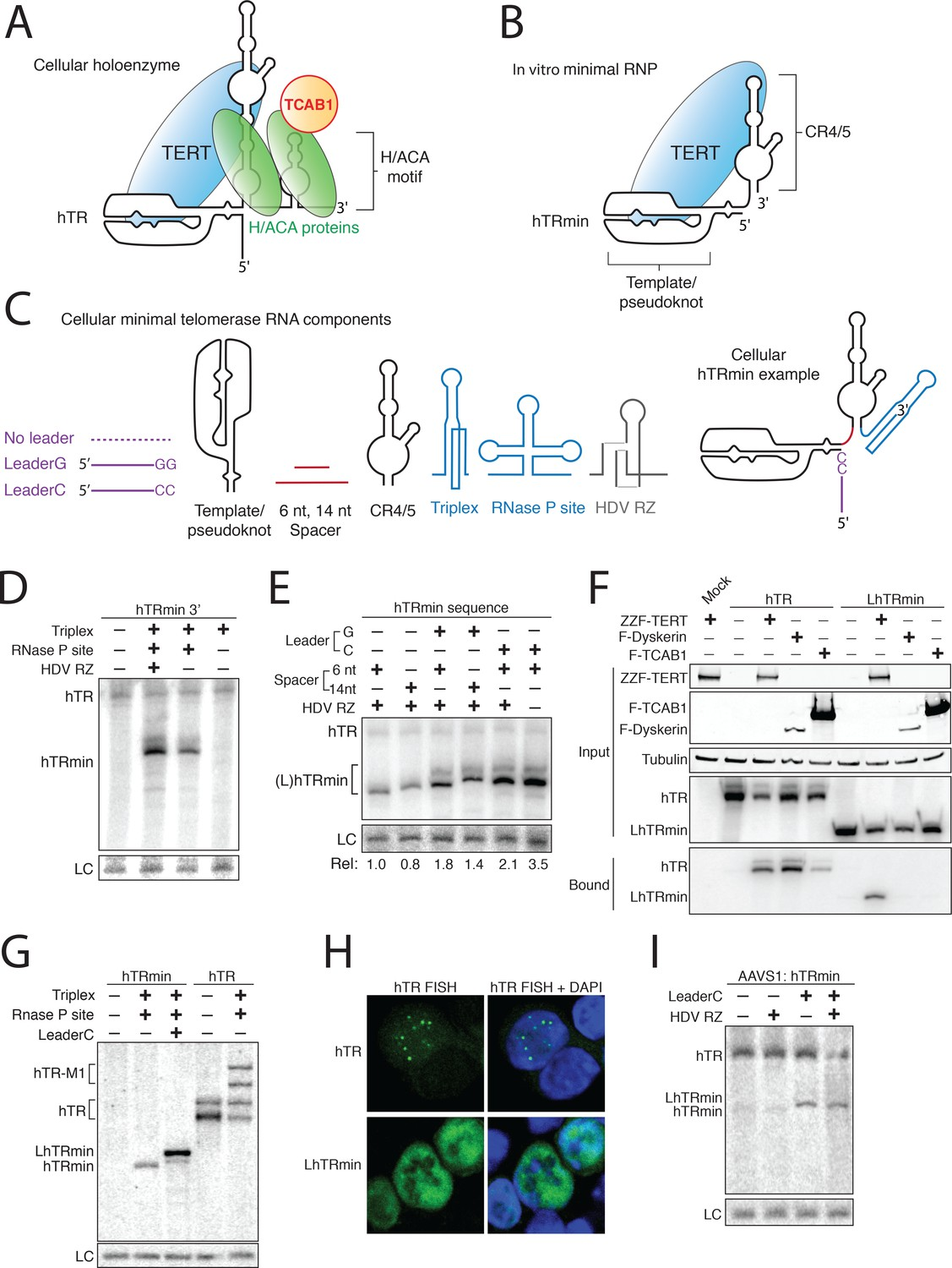 Minimized Human Telomerase Maintains Telomeres And Resolves Circuit Diagram For Dc Motor Control By A Collins Rna Can Accumulate Without H Aca Rnp Biogenesis