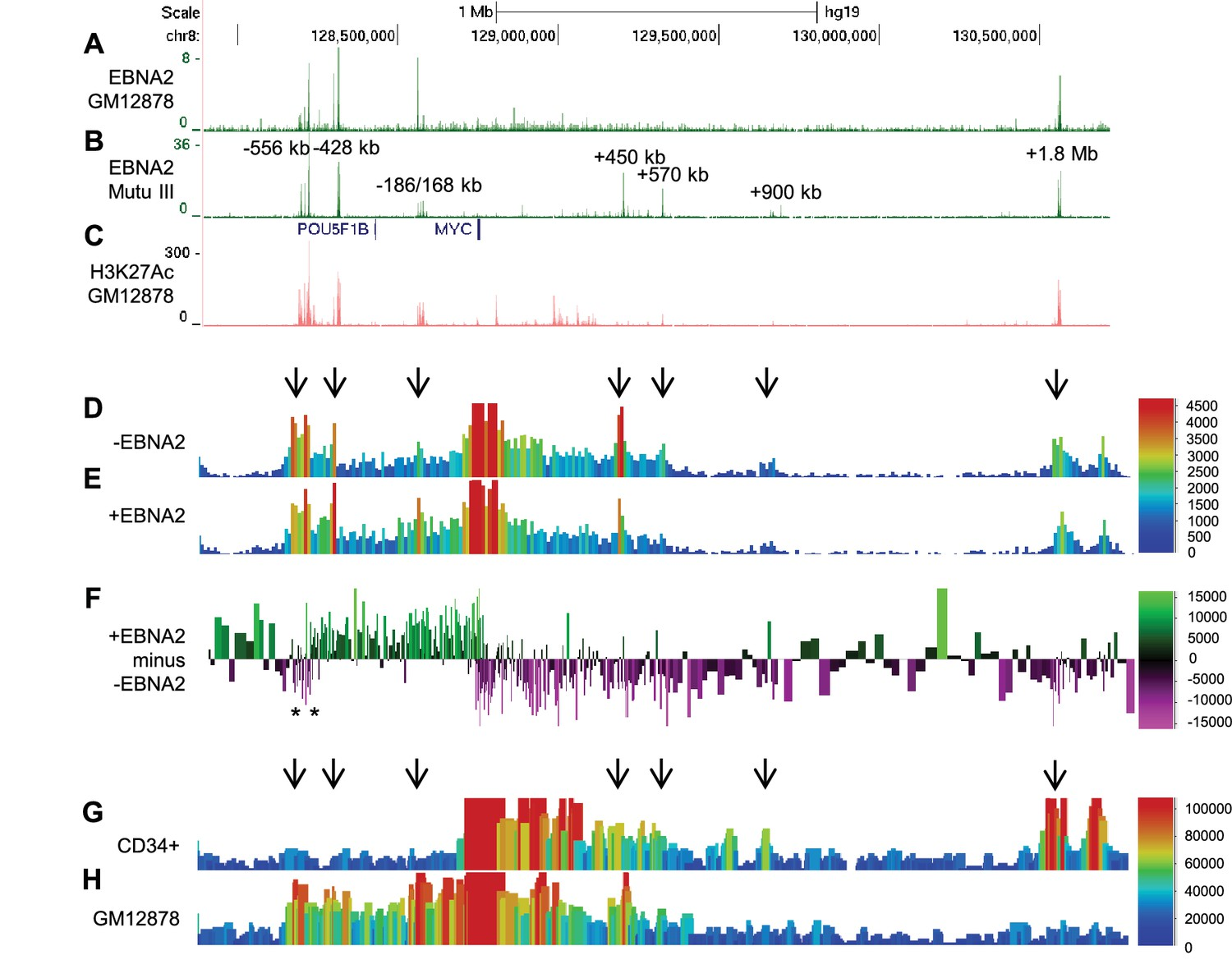 MYC activation and BCL2L11 silencing by a tumour virus