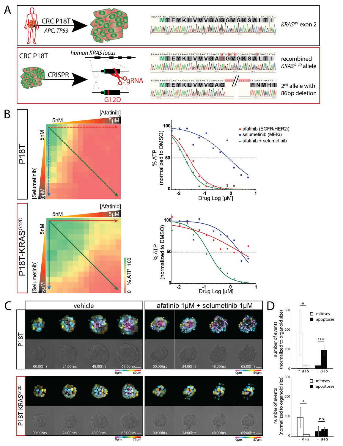Medication discount coupons bvgg - Crispr Genome Editing In Crc Organoids Reveals Effect Of Krasg12d On Drug Response