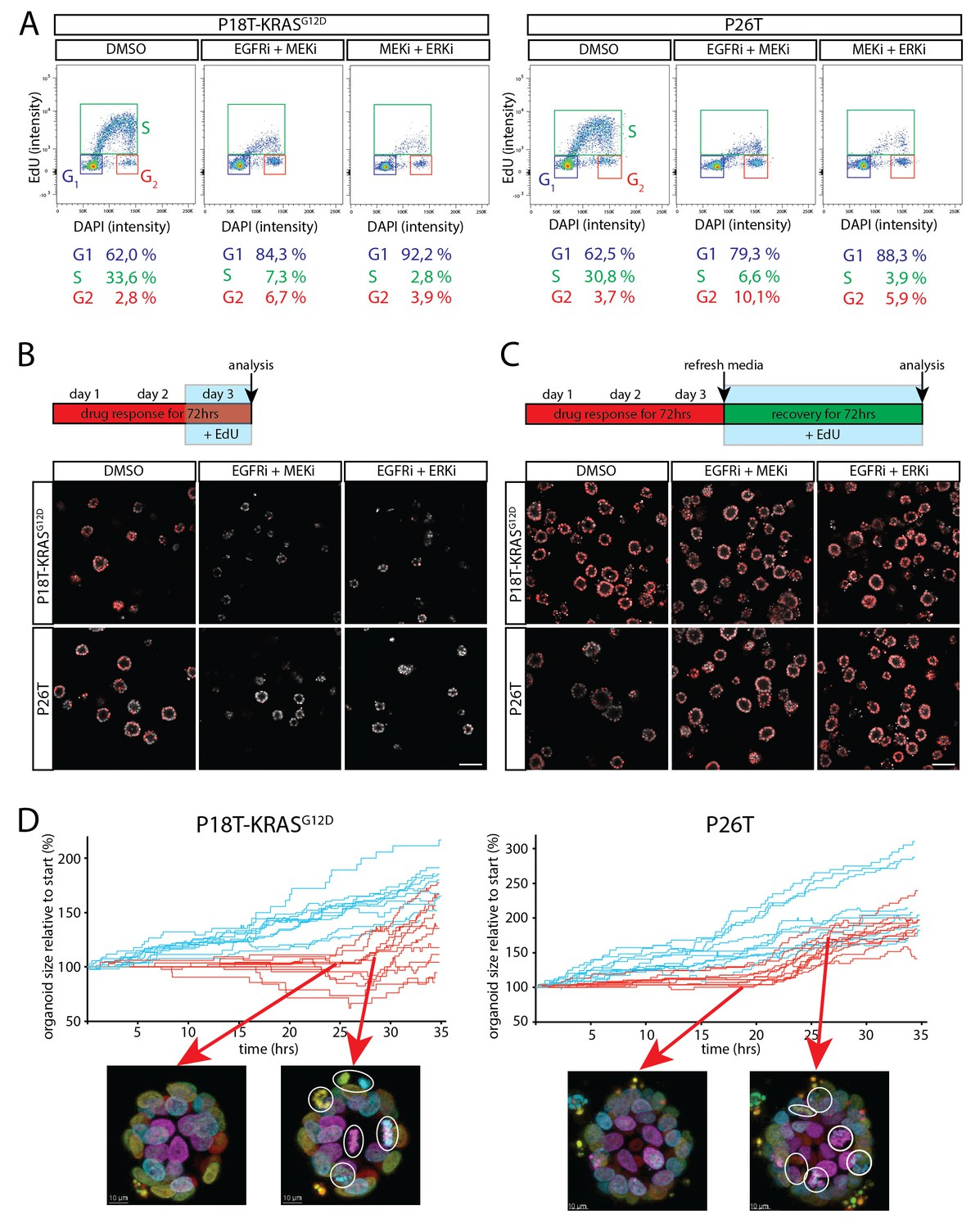 Medication discount coupons bvgg - Cell Cycle Arrest Upon Dual Inhibition Of Egfr Mek Erk Pathway