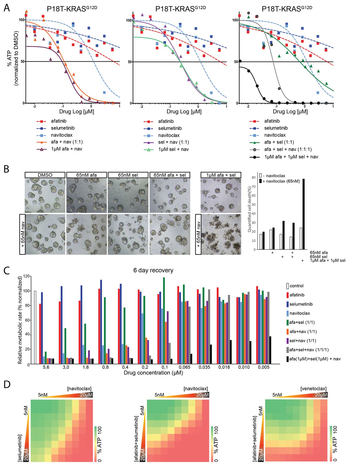 Medication discount coupons bvgg - Robust Inhibition Of The Egfr Ras Erk Pathway Sensitizes For Navitoclax Induced Cell Death