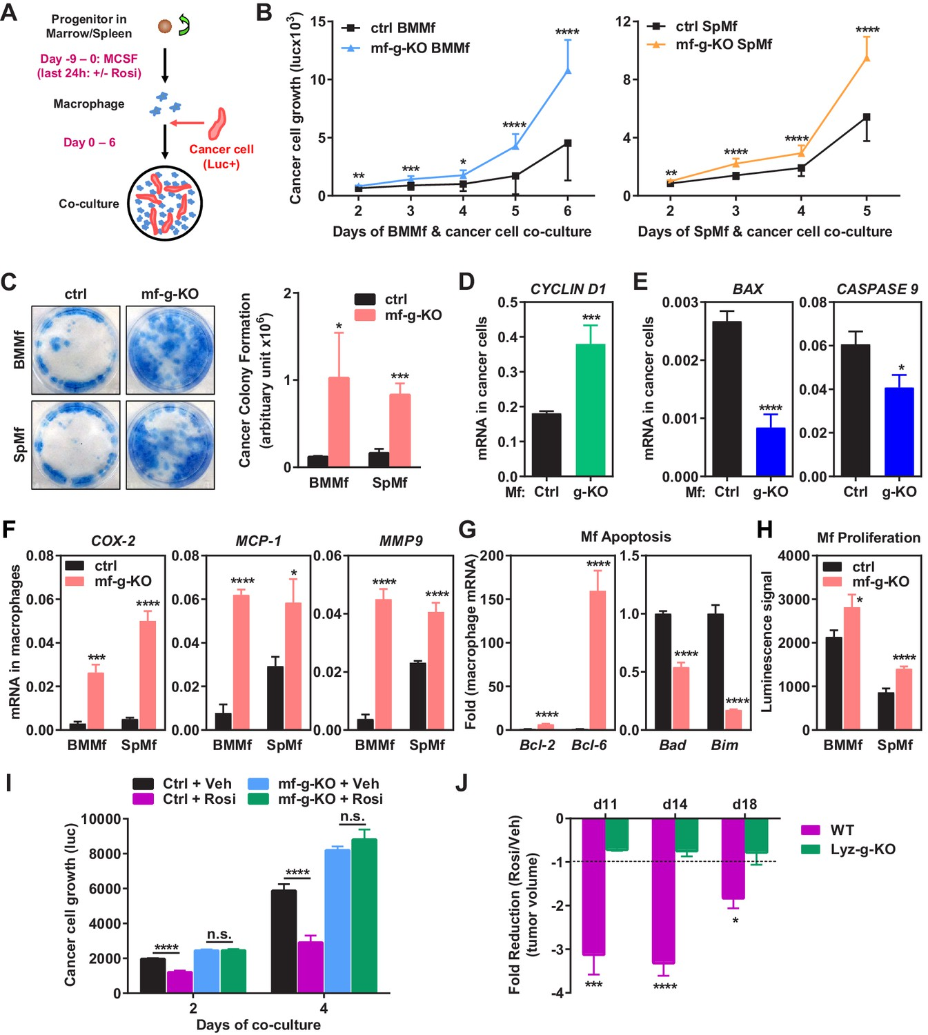 Macrophage Ppar U03b3 Inhibits Gpr132 To Mediate The Anti